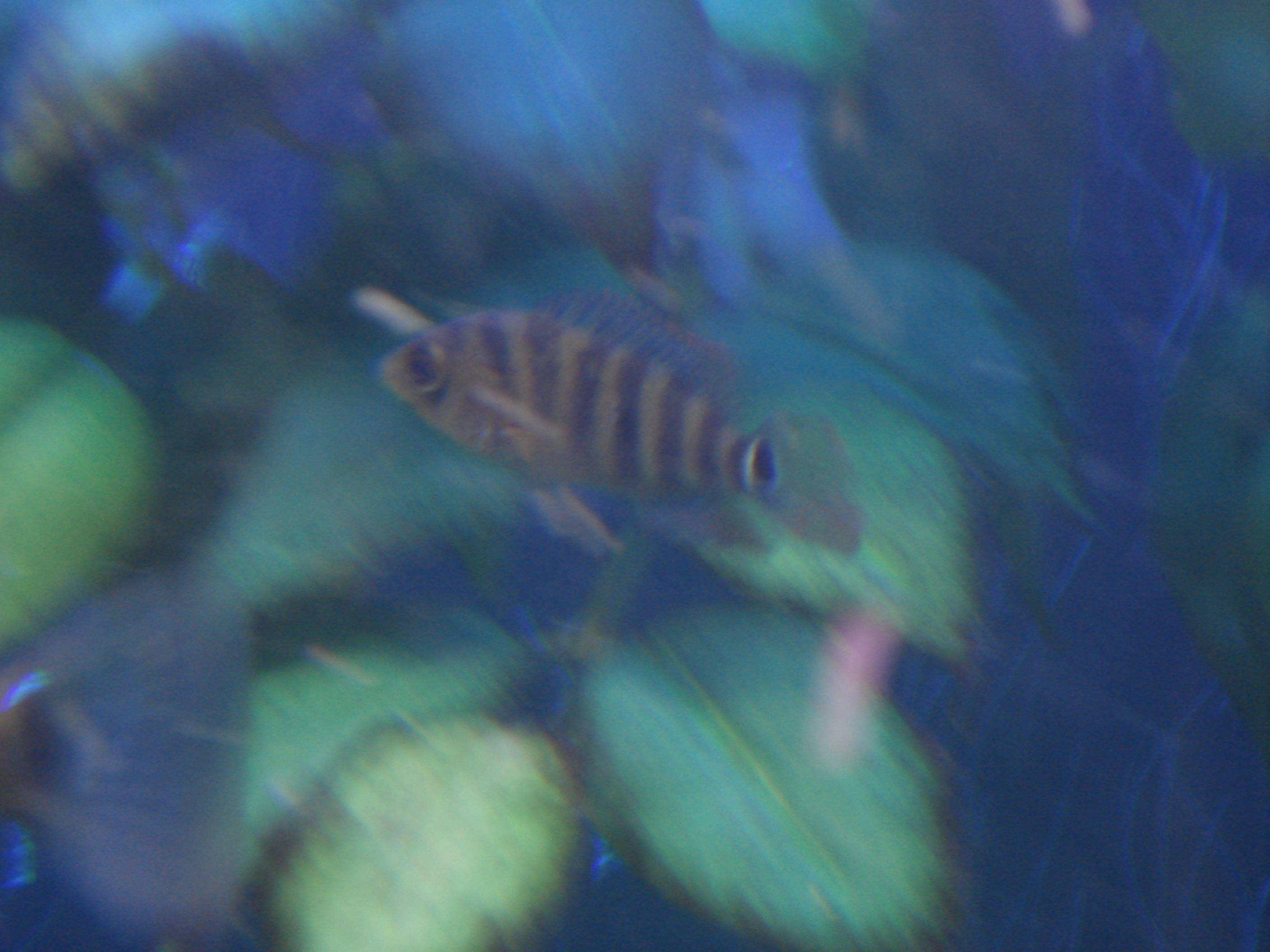 cichlids.com: baby red terror. sorry abot pic.