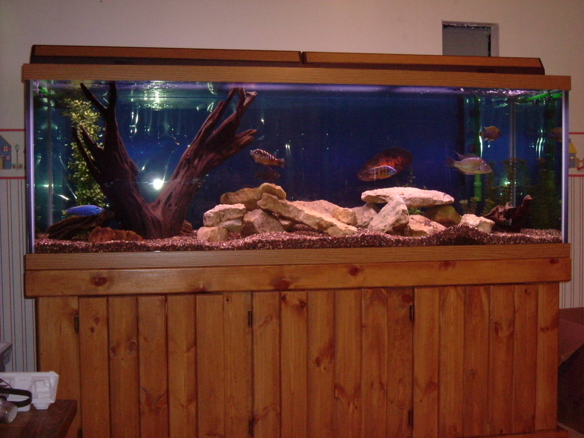 Tank examples 180 gallon cichlid tank for 180 gallon fish tank