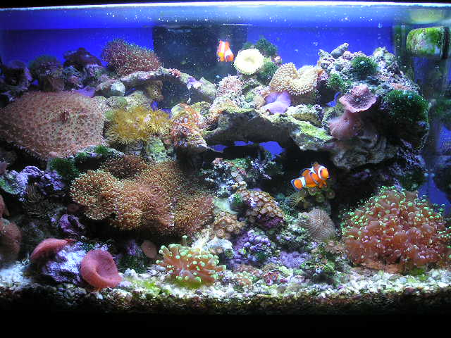 The real cedric 10 gallon reef tank for Saltwater fish for 10 gallon tank