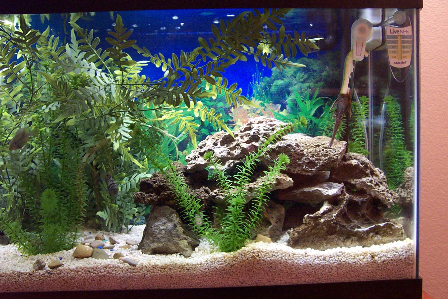 cichlids.com: Tank examples: New Aquascape