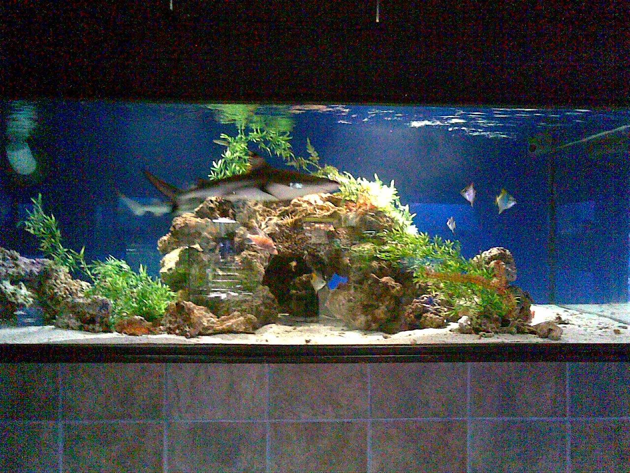 cichlids.com: 2500Gallon Saltwater Aquascape