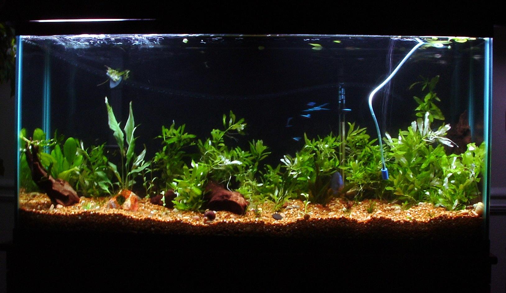 cichlids.com: Newly planted Discus tank