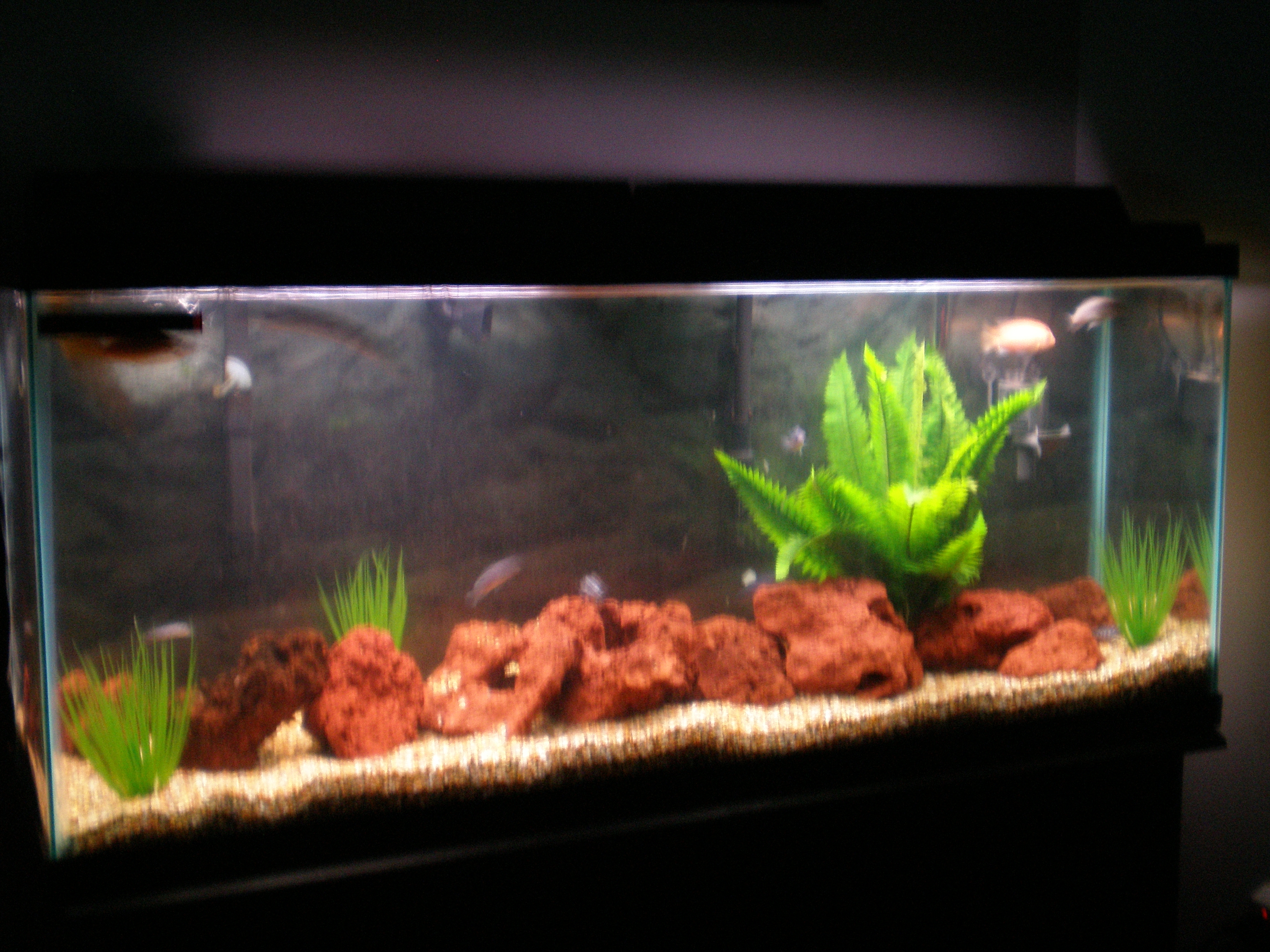 55 gallon fish tank in litres fish tank pauls 55 gallon for How many gallons in a fish tank calculator