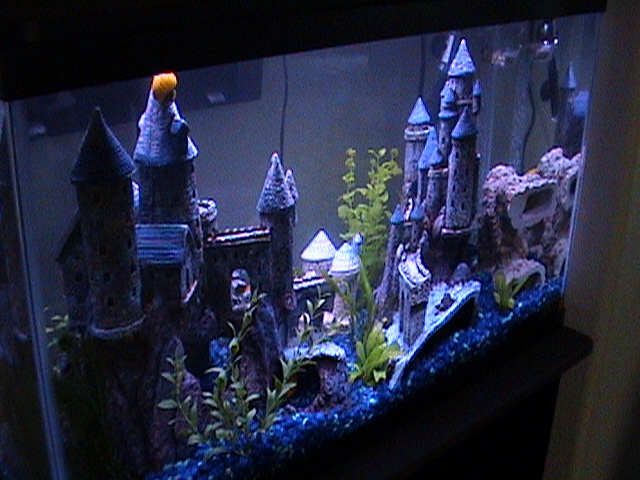 My 29 gallon mbuna tank with tacky castle 39 s for Fish tank castle decorations
