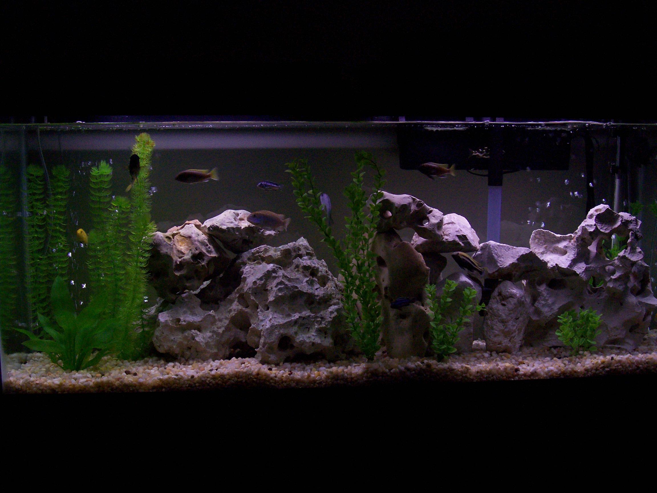 My Texas Limestone Aquarium