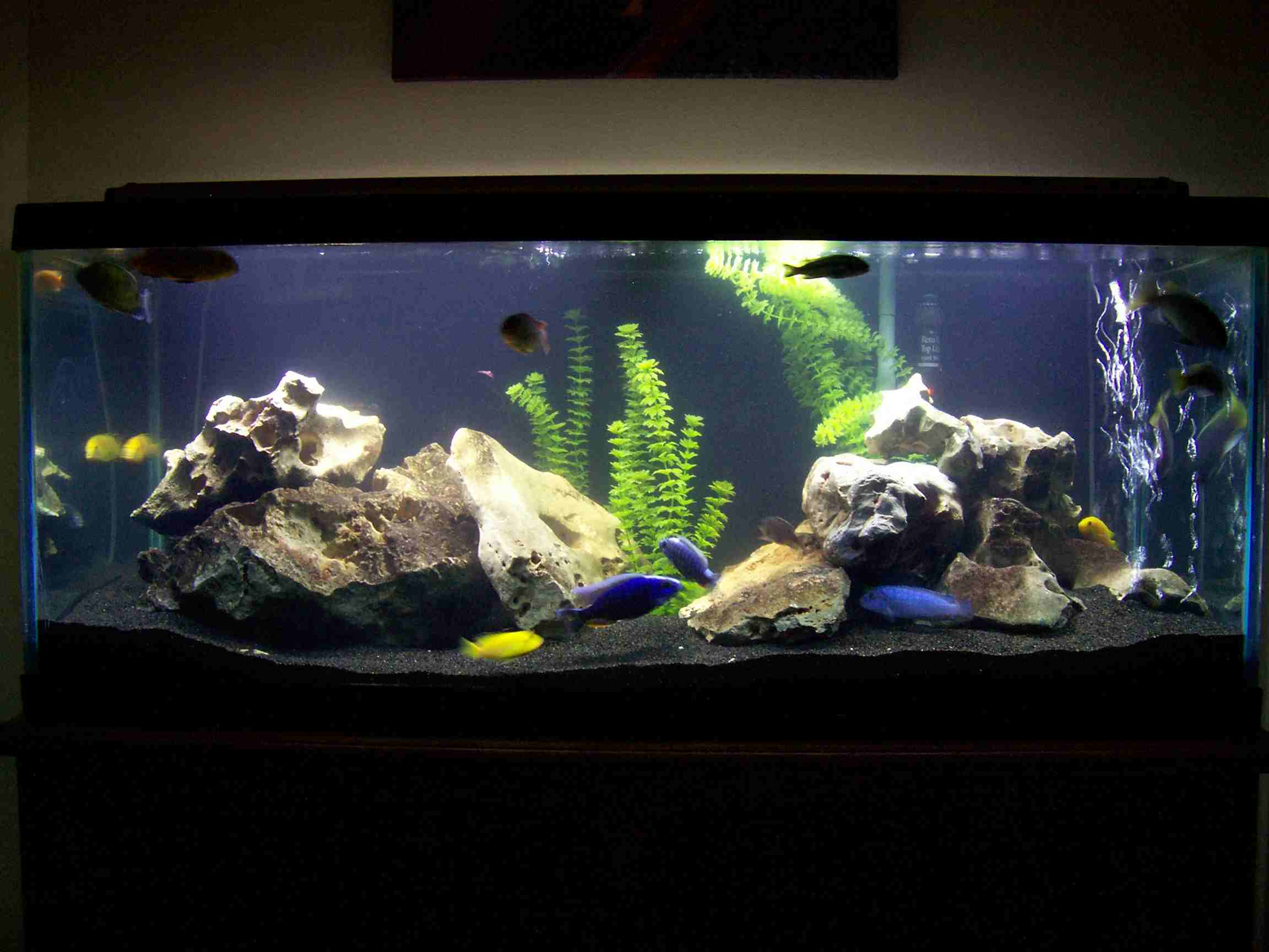 70 gallon aquarium for sale 70 gallon mbuna 2017 fish