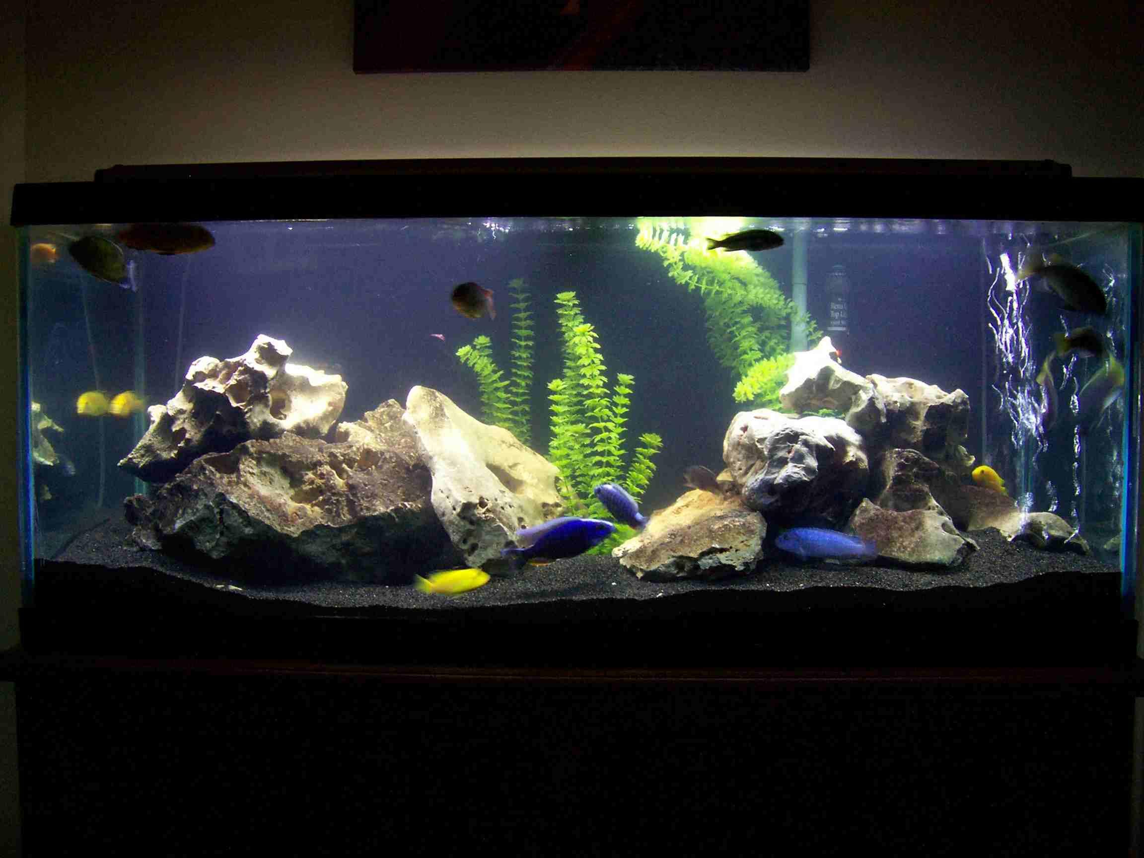 Tank examples 70 gallon mbuna for Petsmart fish tanks for sale
