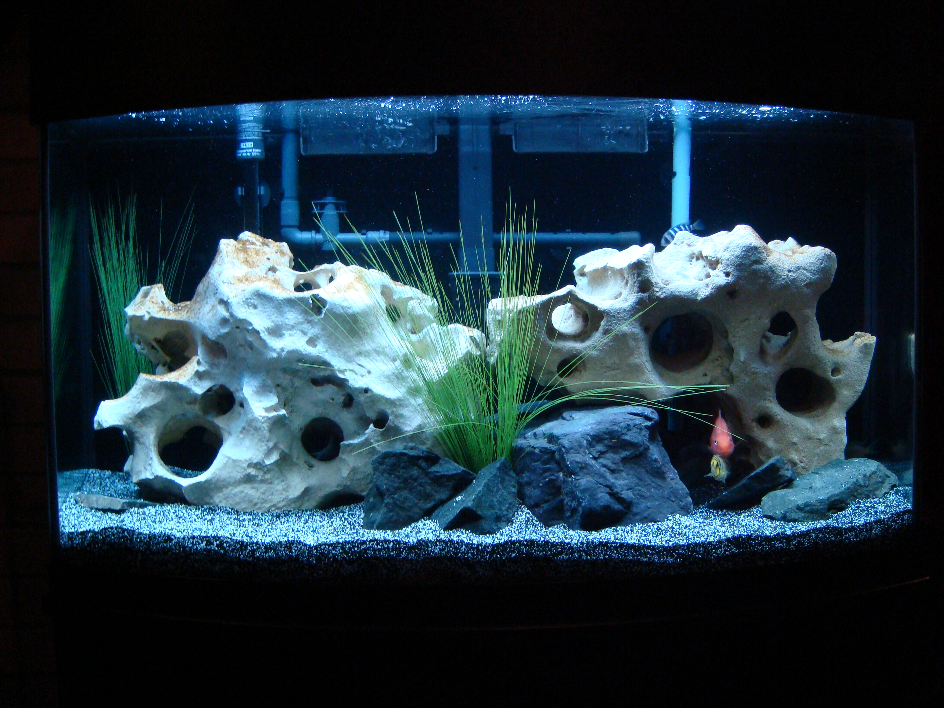 Tank examples 46 gallon oceanic bow front for African cichlid rock decoration