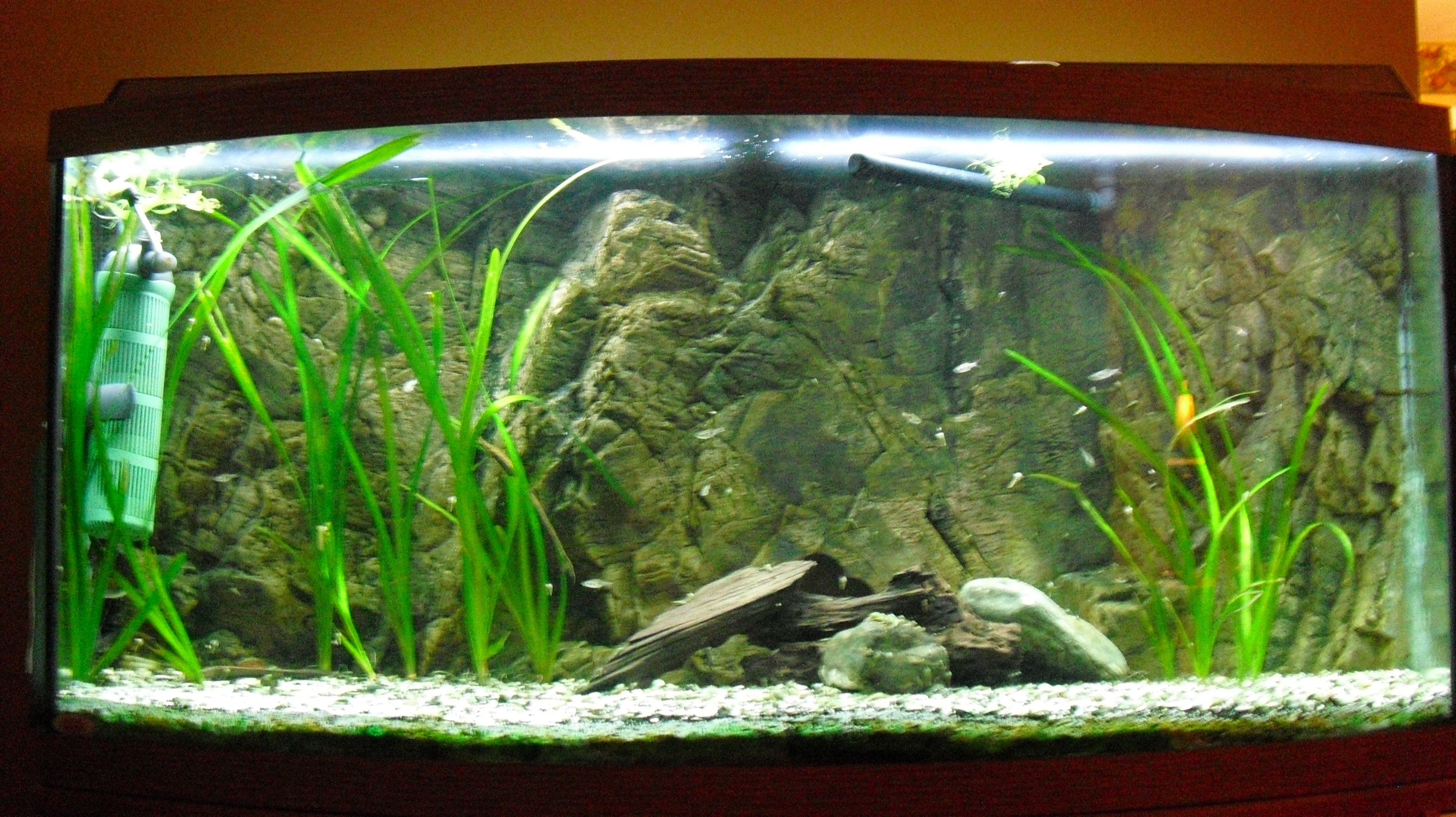 Empty fish tank - photo#11