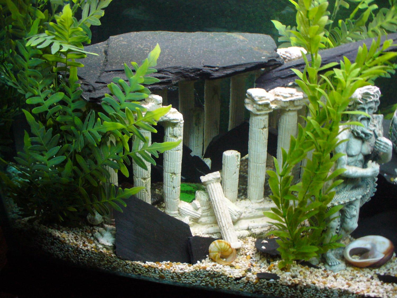 Tank examples 110gallon atlantis themed hey for Idee deco aquarium