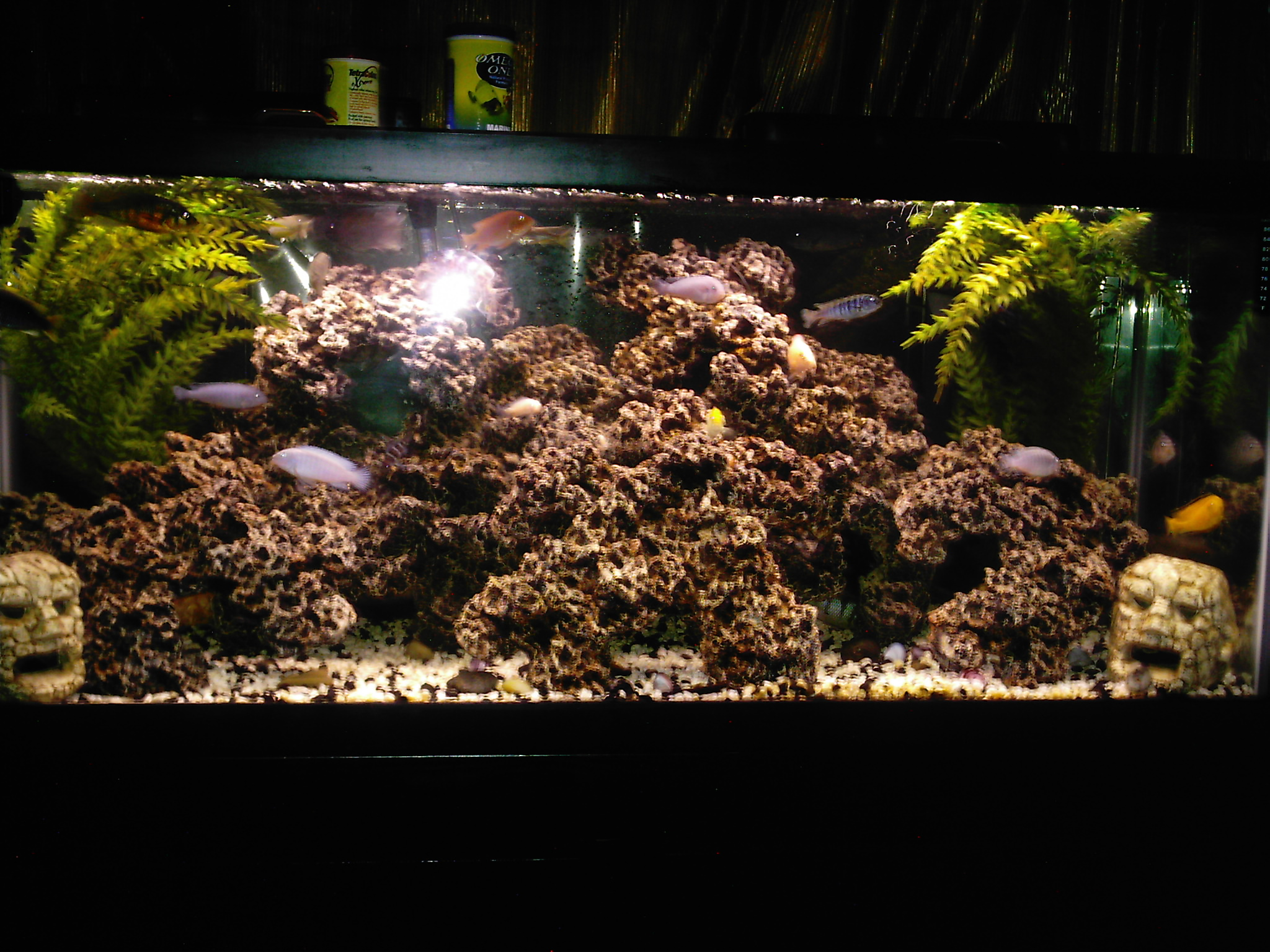 Cichlid Tank Decorations Cichlid Tank Decorations