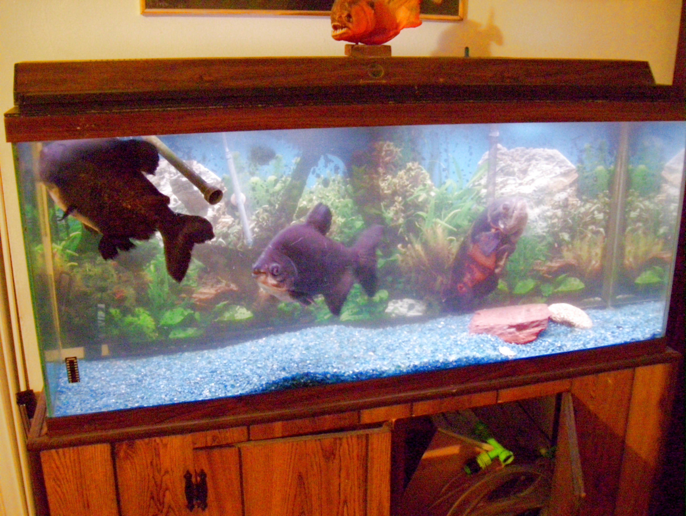 Tank examples for 50 gallon fish tank dimensions