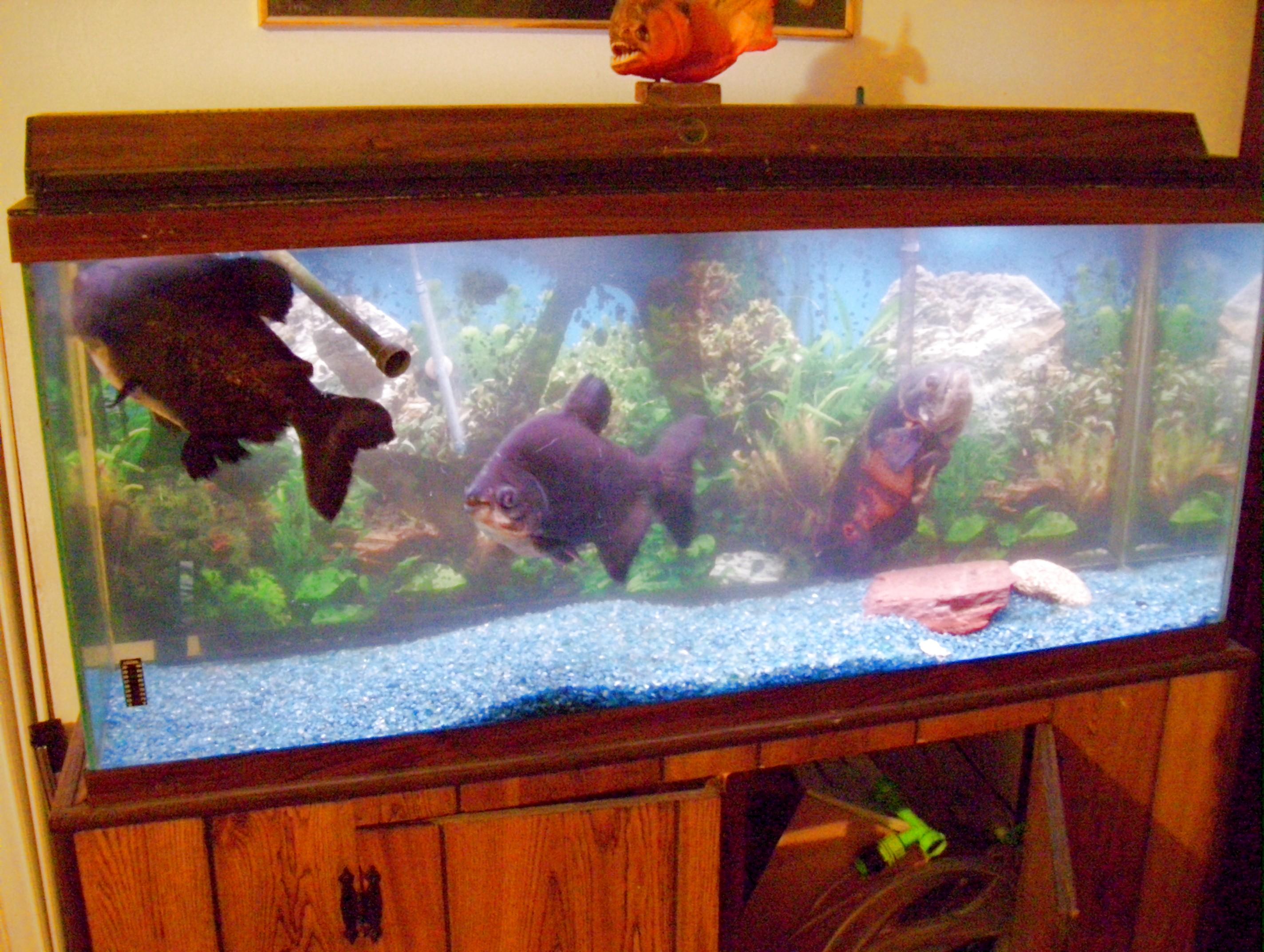 40 Gallon Glass Aquarium 1000 Aquarium Ideas