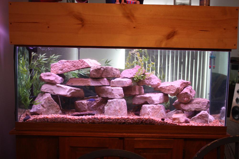 Tank examples 75 gallon room divider for Fish tank divider 75 gallon
