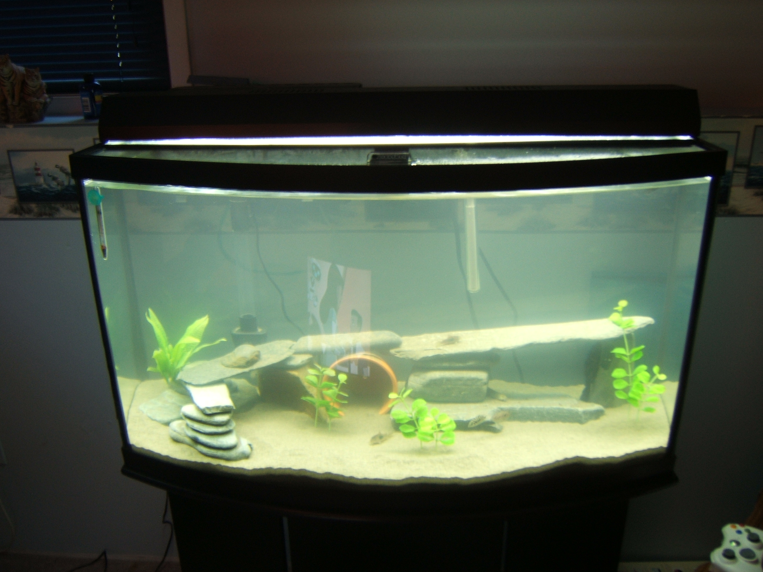 65 Gallon Bow Front Aquarium 1000 Aquarium Ideas - oc