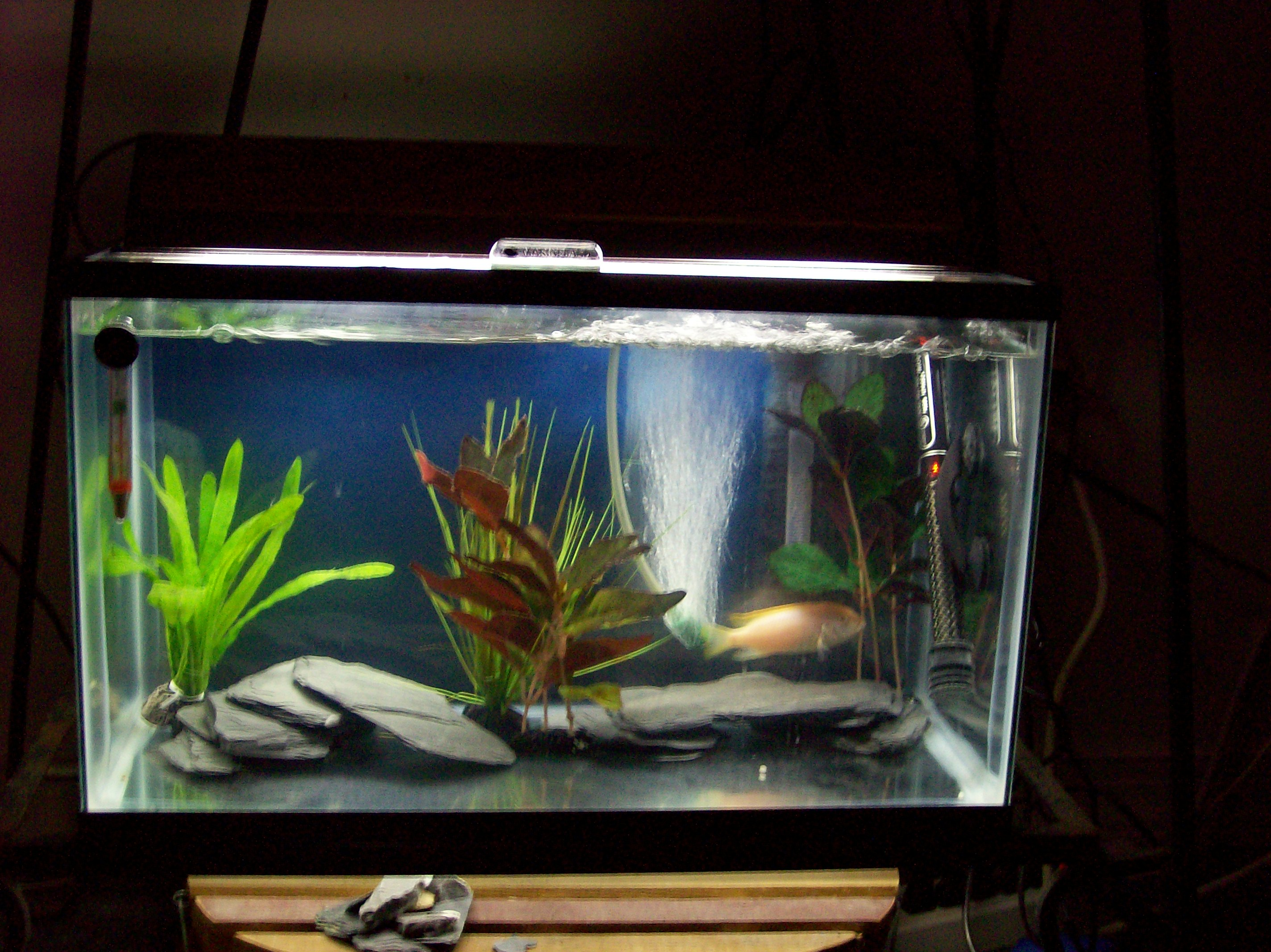10 gallon fish tank in litres - 10 Gallon Tank: My 32 ... 10 Gallon Home Aquariums
