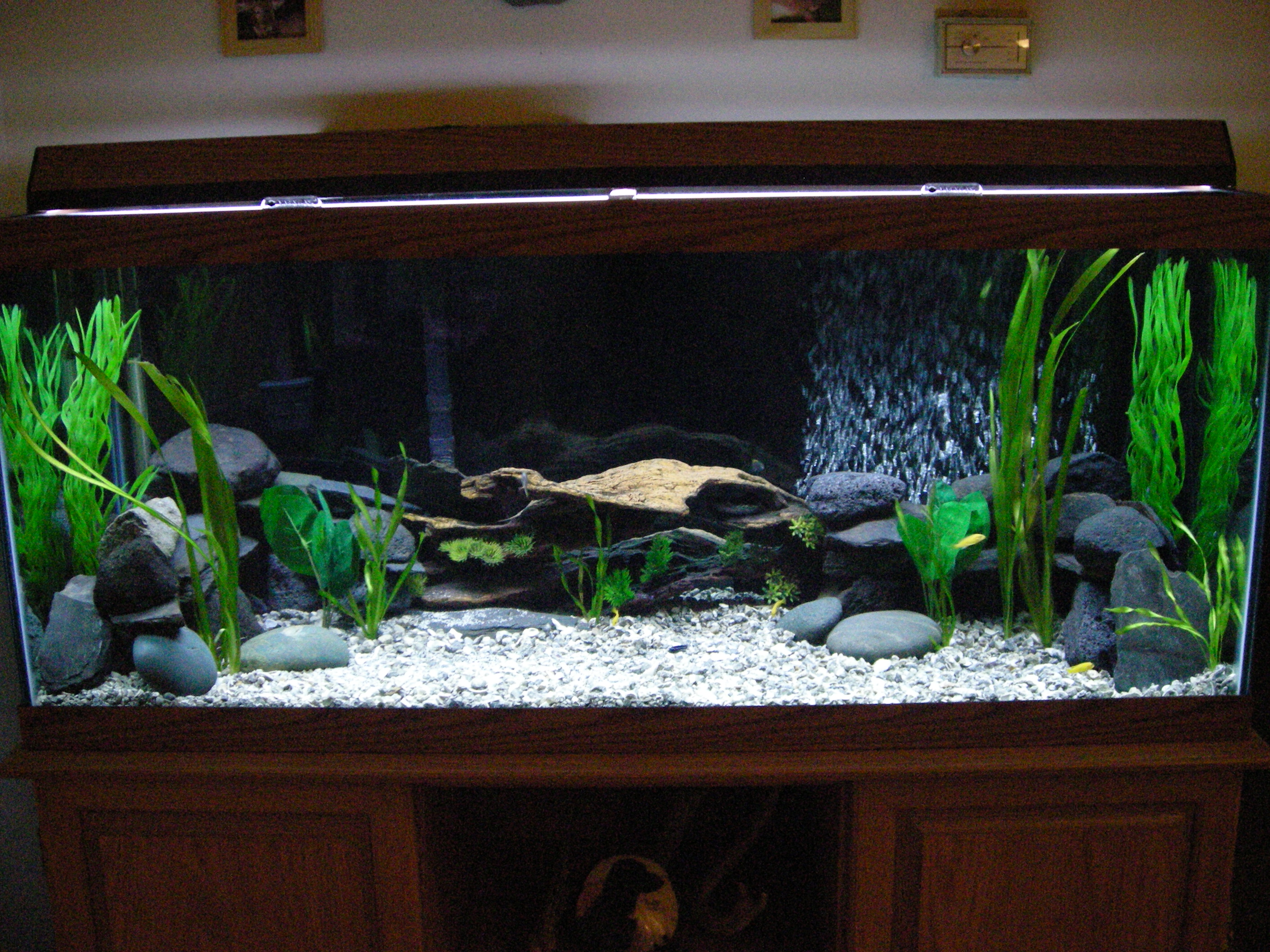 Tank examples my first african cichlid tank for African cichlid tank decoration