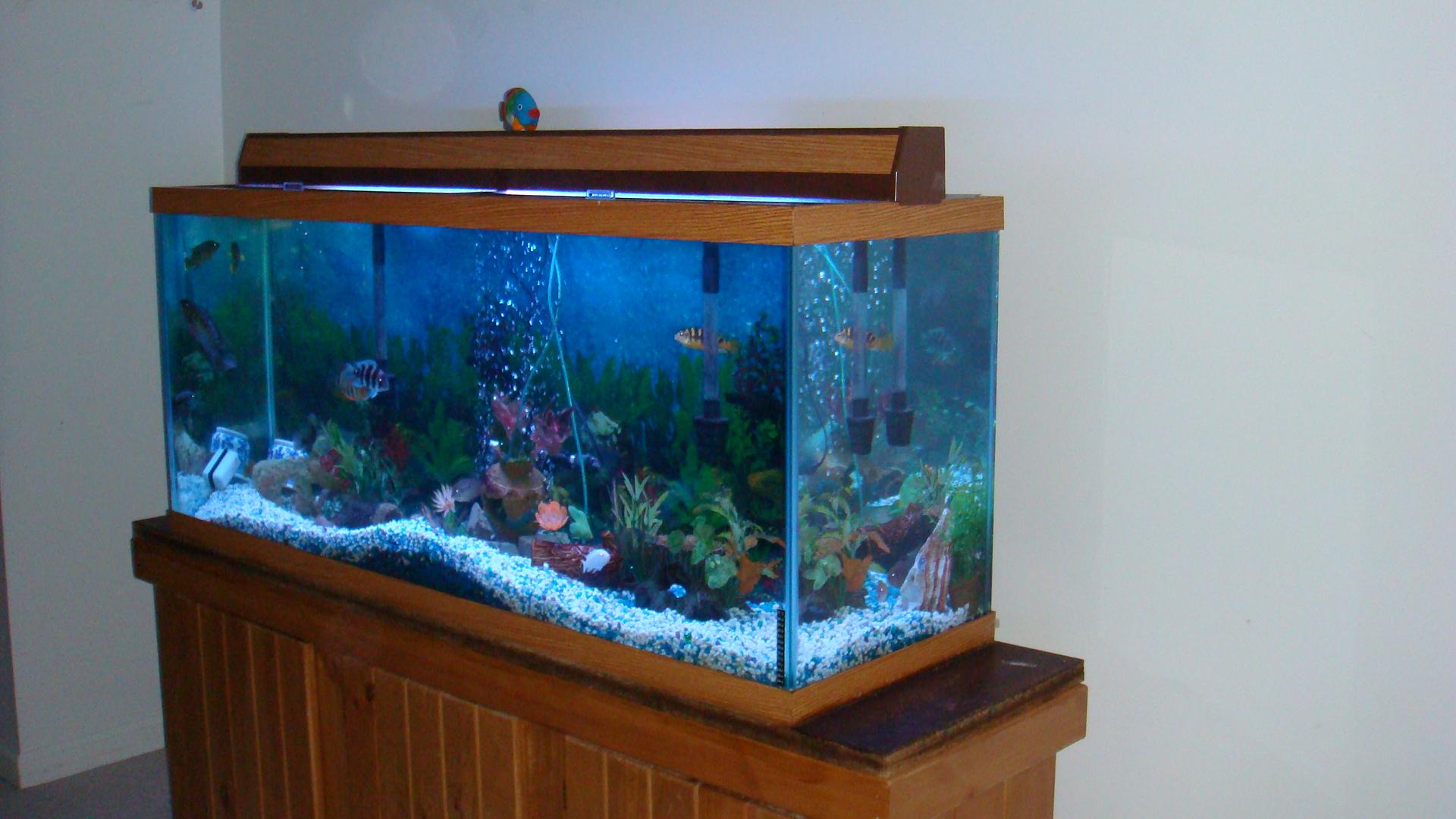Front view of 120 gallon aquarium for 37 gallon fish tank