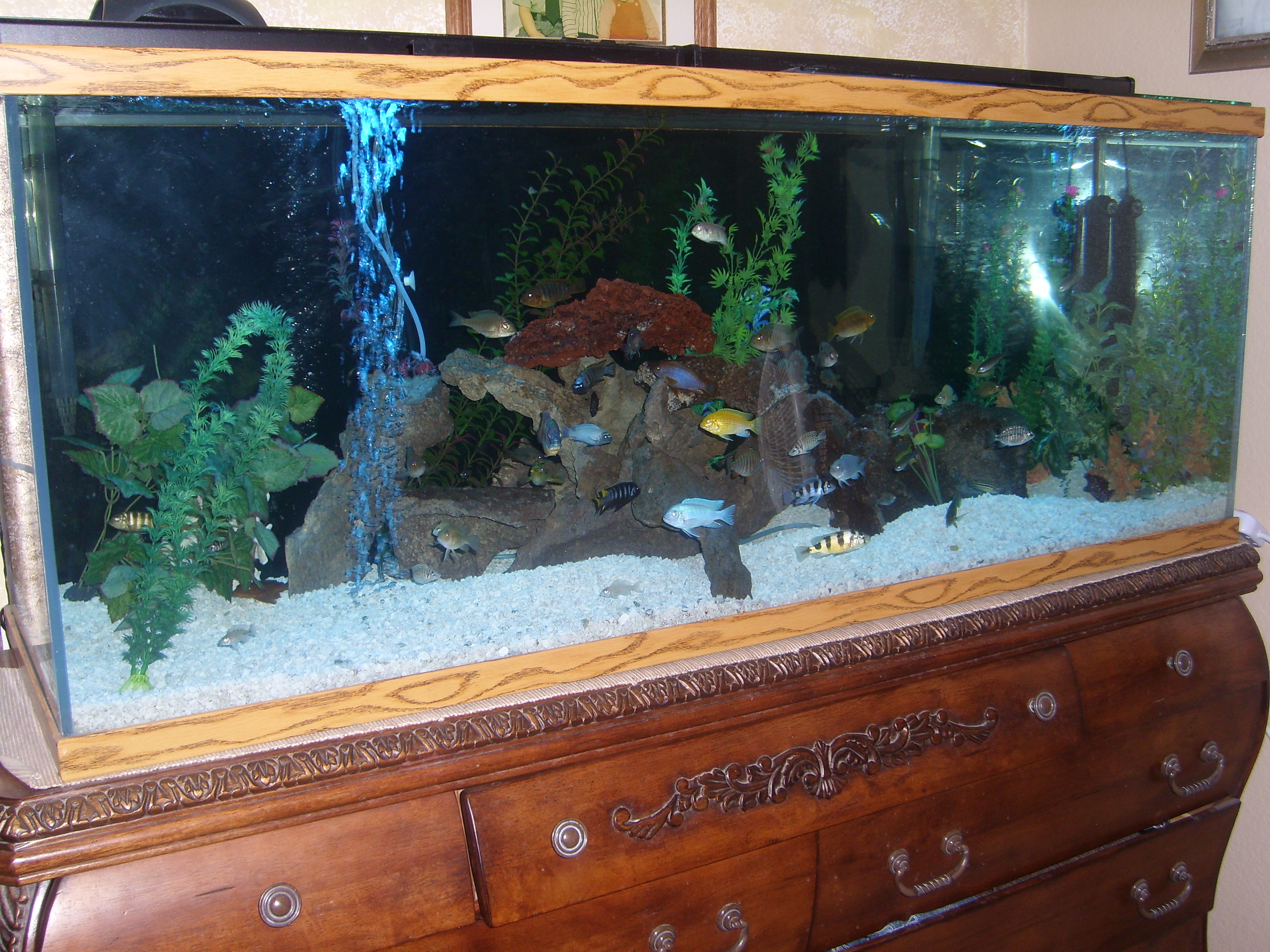 100 gallon fish tank good my new 100