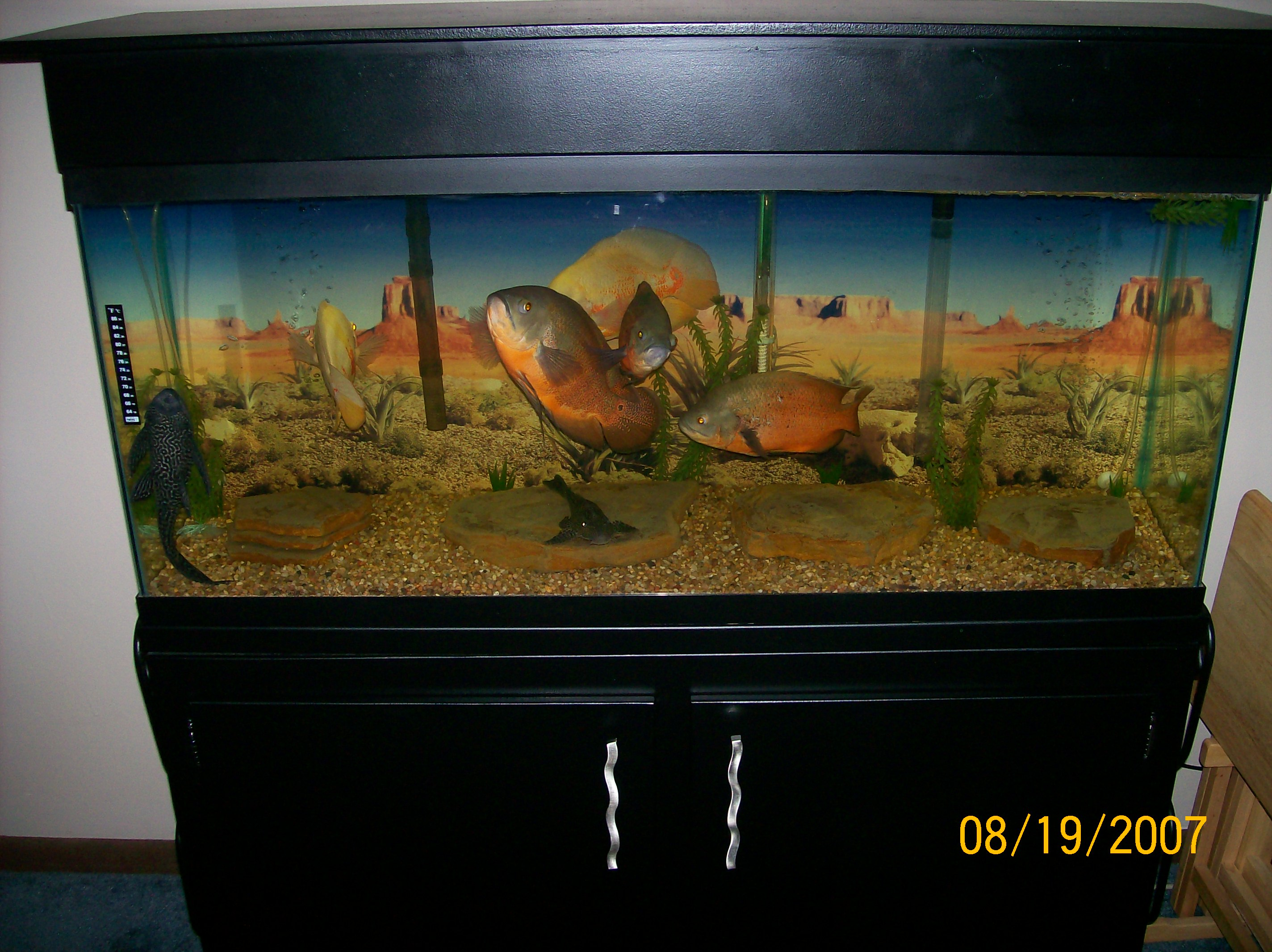 Turtle Tank For Sale Cheap Glass Turtle Terrarium 24x18x14 Monstermarketplace likewise Howtocleanafishtank also Maintenance Free Fish Tank 3d Screensaver Windows 7 as well  together with Toilet Aquarium. on oscar fish tank cleaning