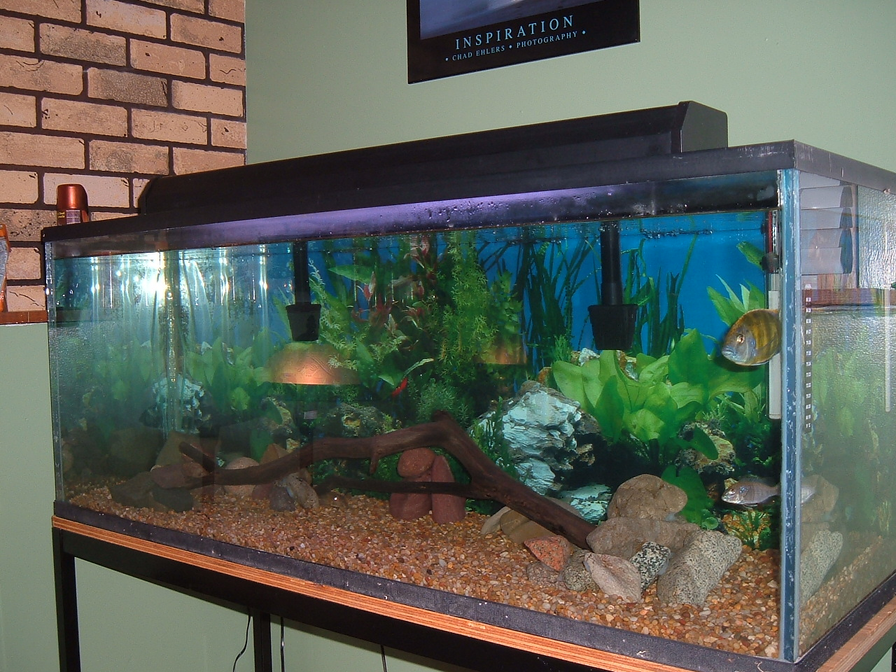 Tank examples 70 gallon malawi hap tank for 75 gallon fish tank dimensions