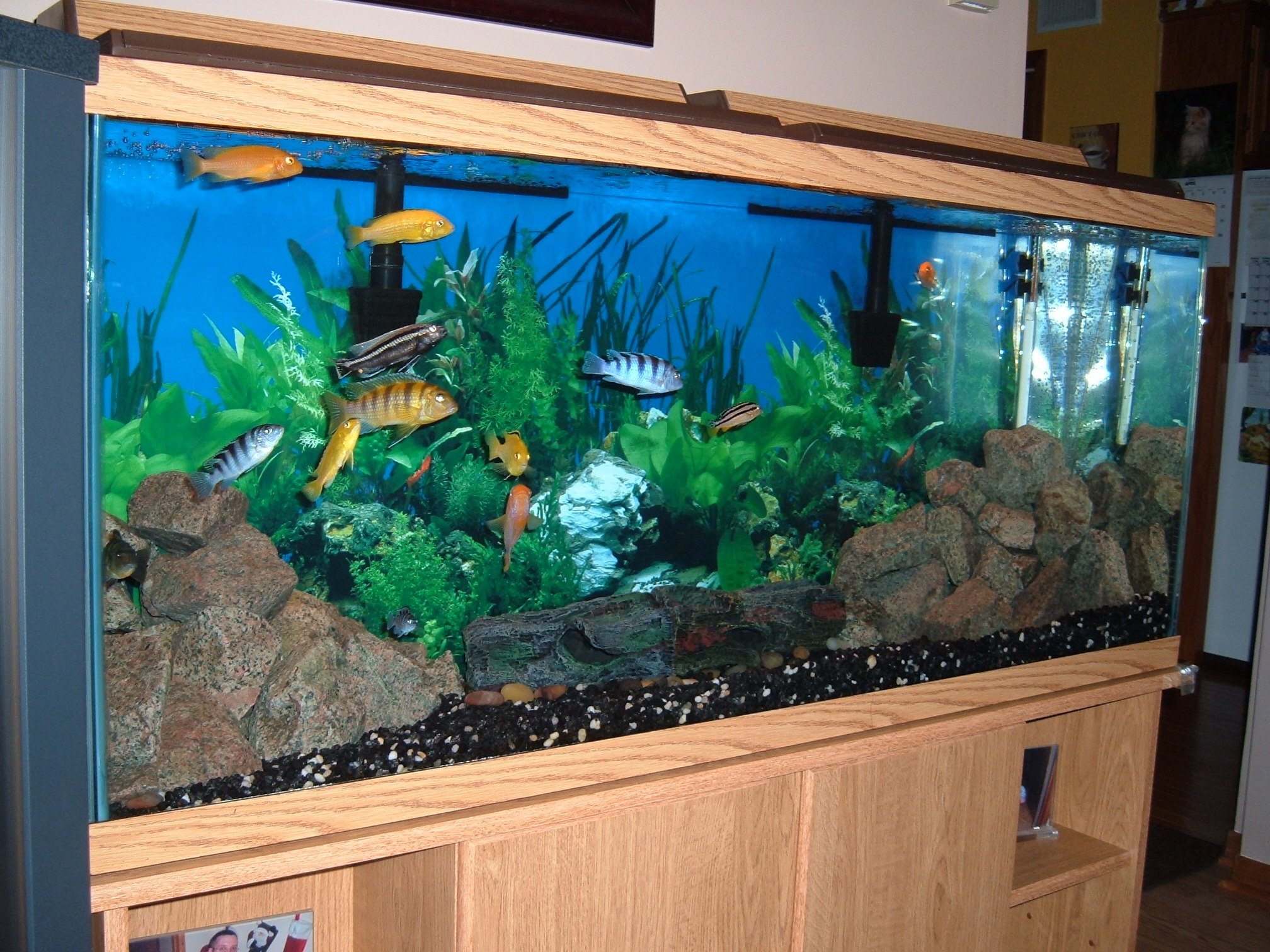 Tank examples 55 gallon mbuna tank remodeled for 200 gallon fish tank dimensions