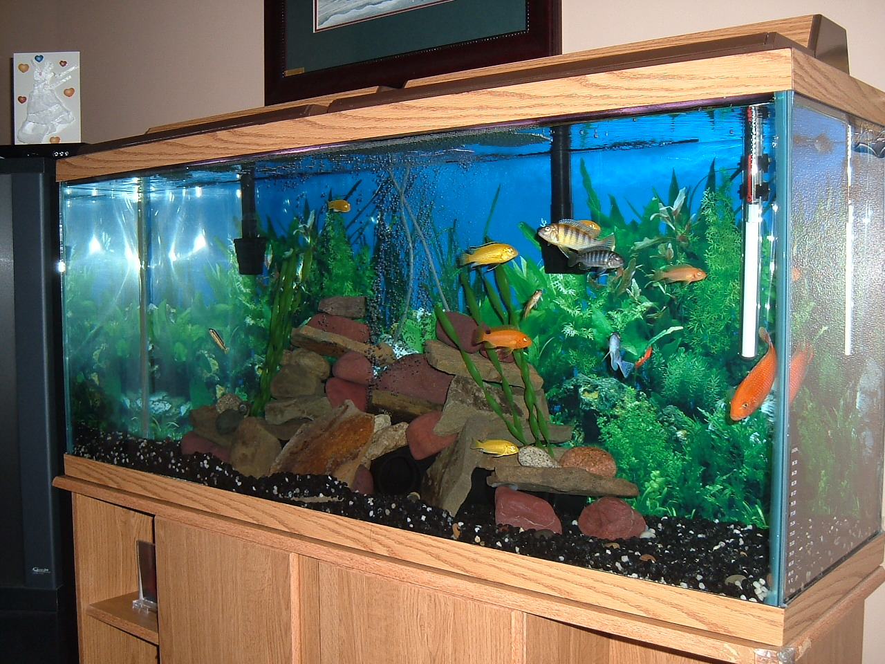 55 gallon fish tank gravel 55 gallon fish tank aquarium for 55 gallon aquarium decoration ideas