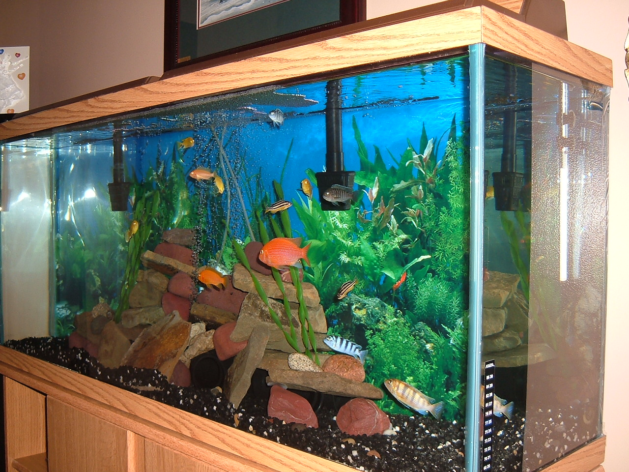 55 gallon mbuna tank for 55 gallon aquarium decoration ideas