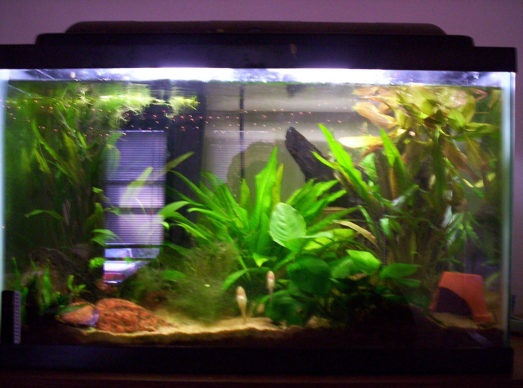 cichlids com  tank examples  10gal s a tank   soon to be tang