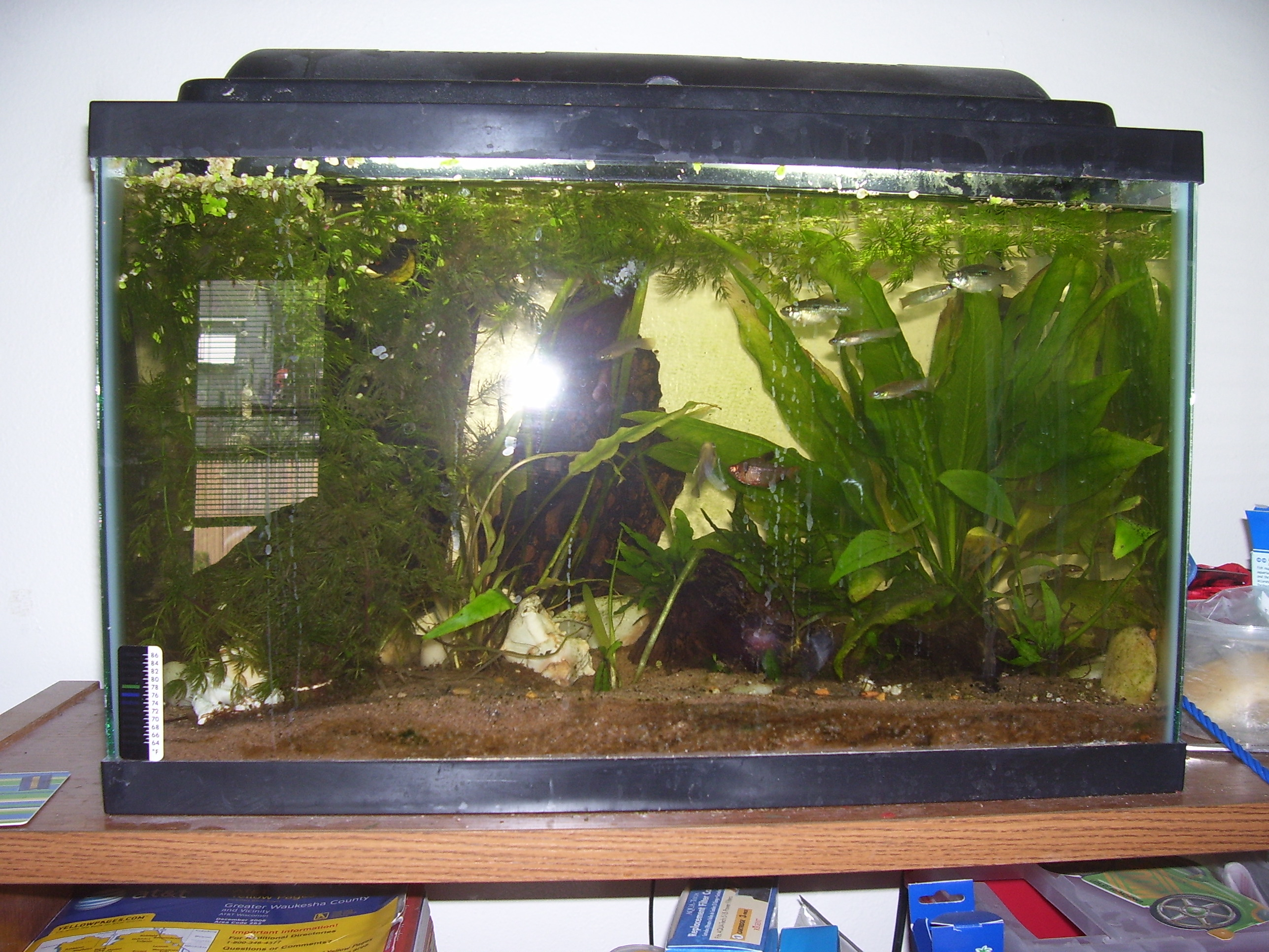 Tank examples holding tank for apistos for Fish holding tanks