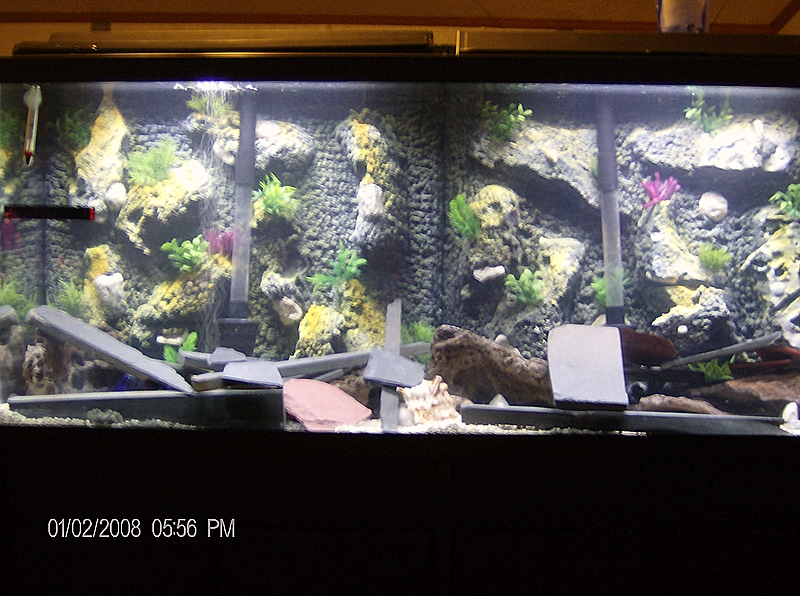 55 gallon fish tank background 55 gallon tank 55 gal 3d