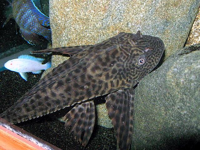 Funny Images Cat Fish