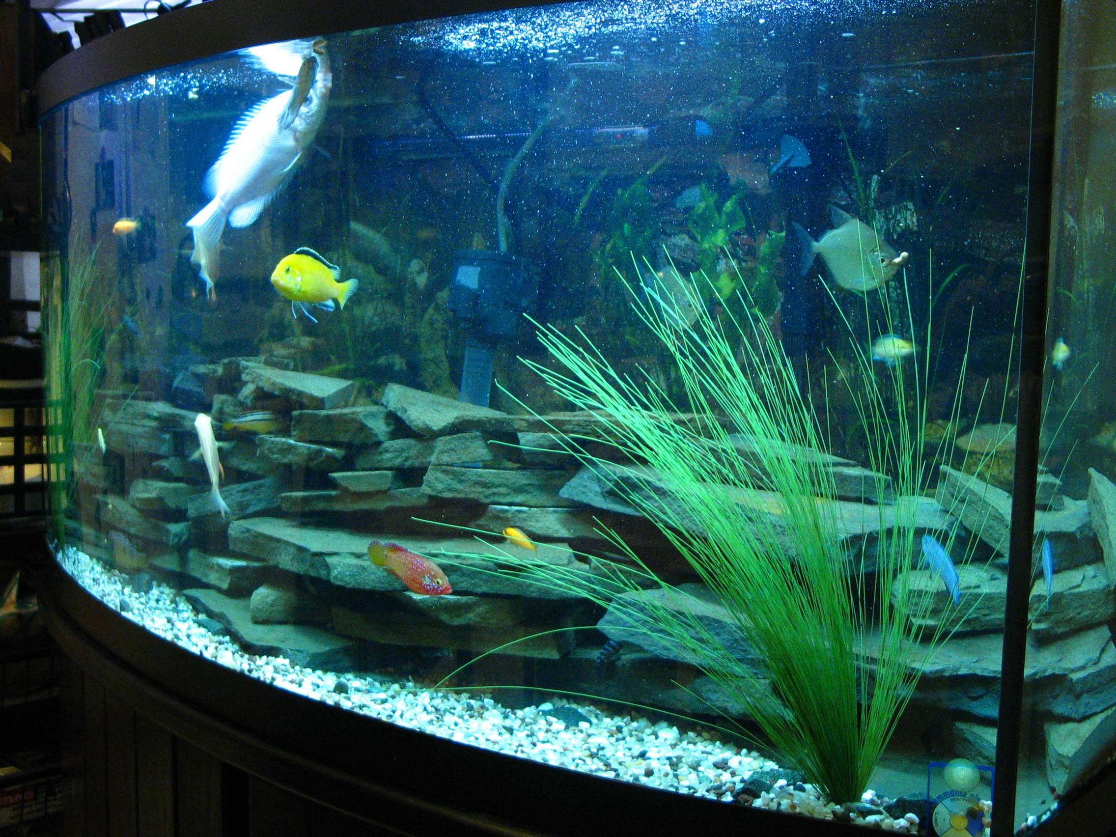 72 gal bow front tank for Bow front fish tank