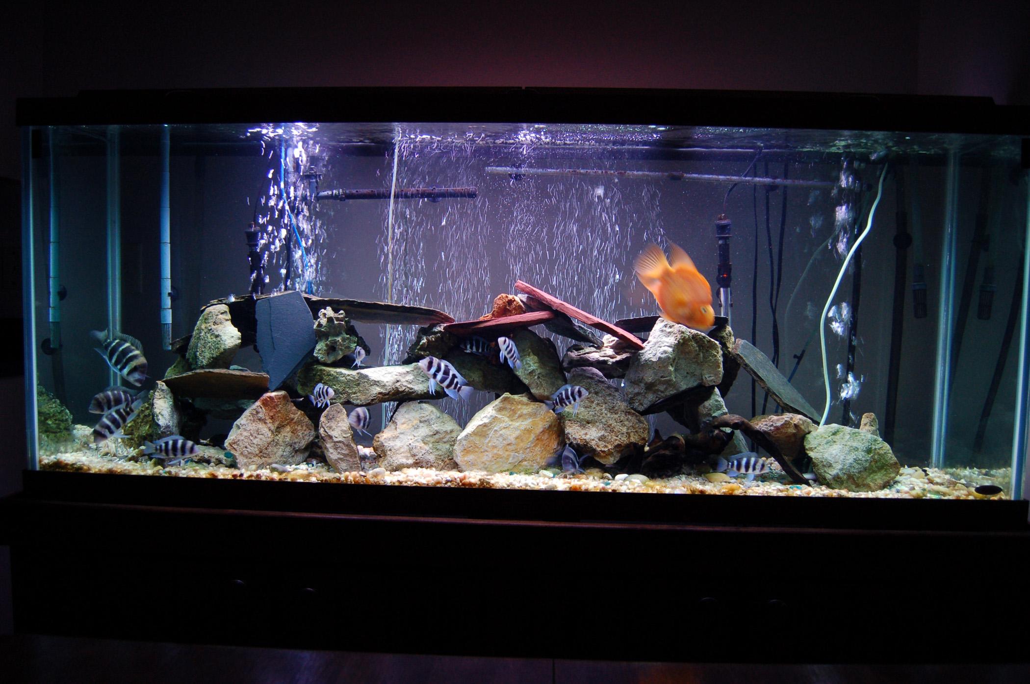 Tank examples 150 gallon frontosa tank for 150 gallon fish tank dimensions