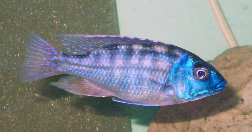My Proud Tawain Reef In Full Colour