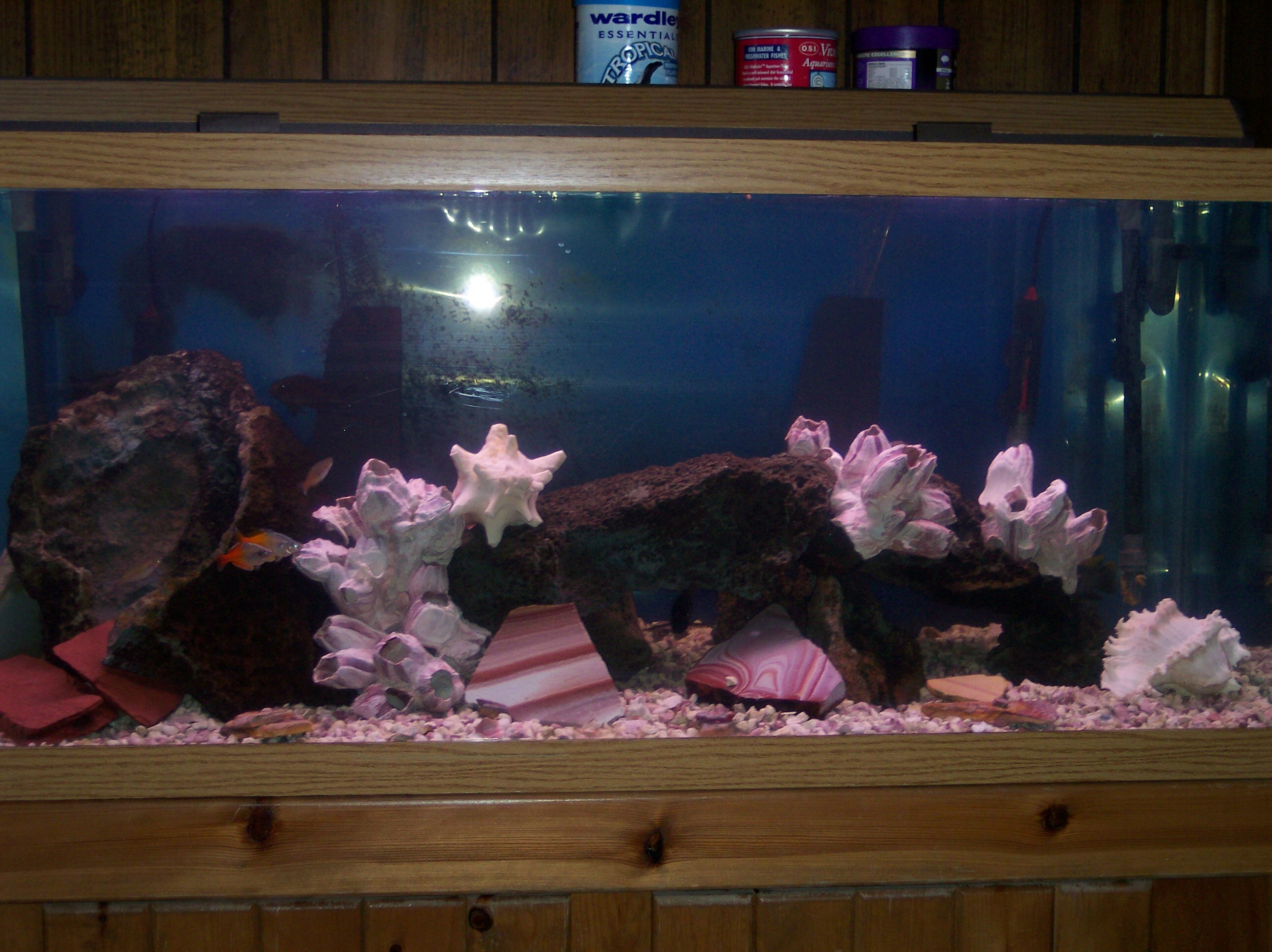 Pink fish tank aquarium with filter - Think Pink 75