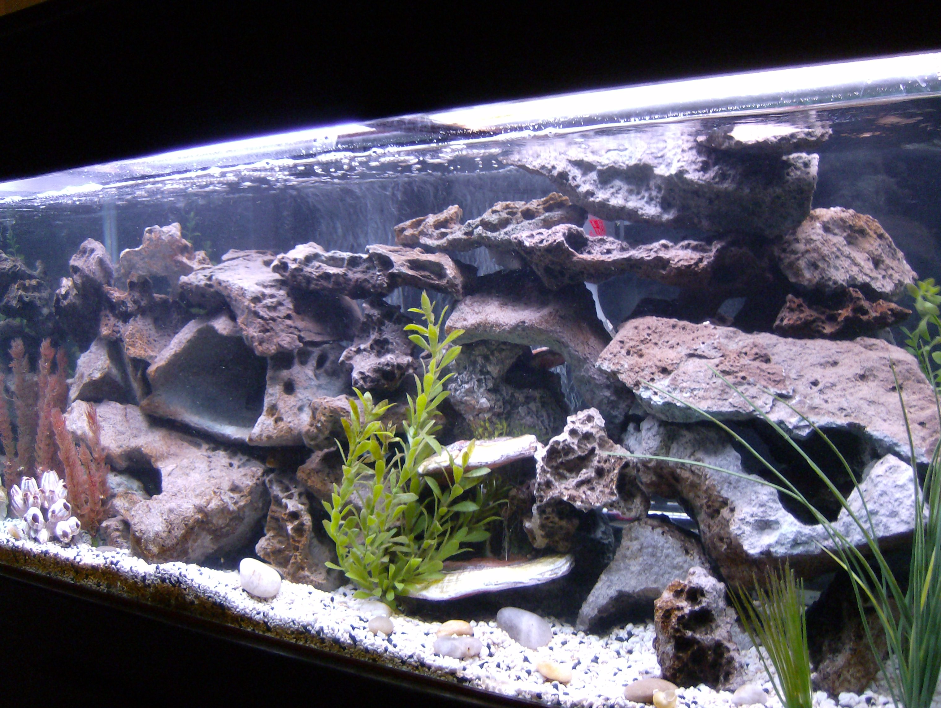 Tank examples african cichlid tank for African cichlid rock decoration