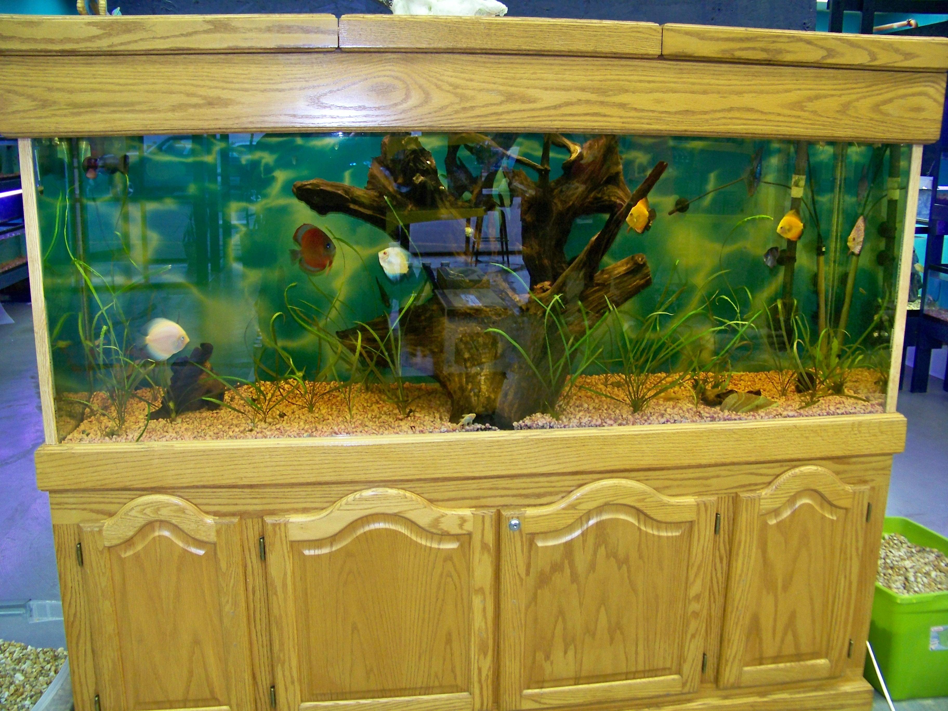 Discus fish 20 gallon tank 150 gallon for 29 gallon fish tank dimensions