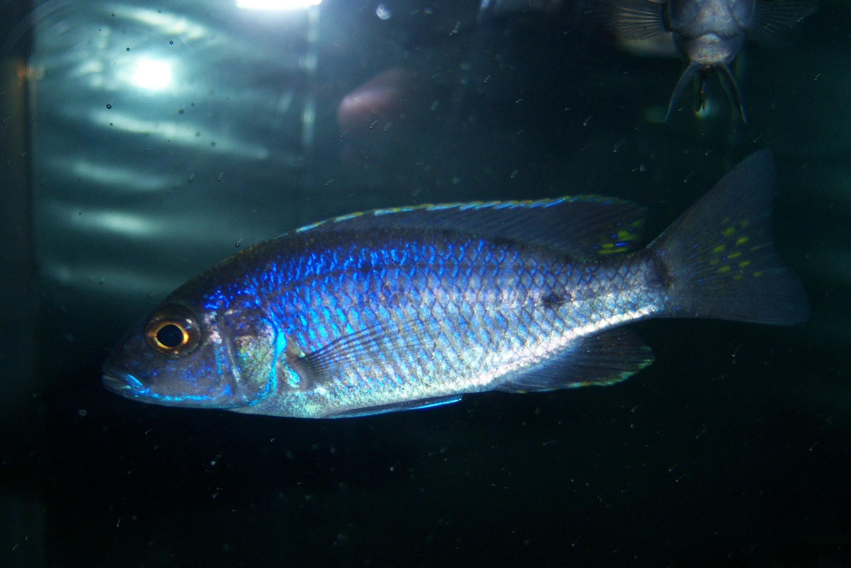Walmart fish 1 for Types of fish at walmart