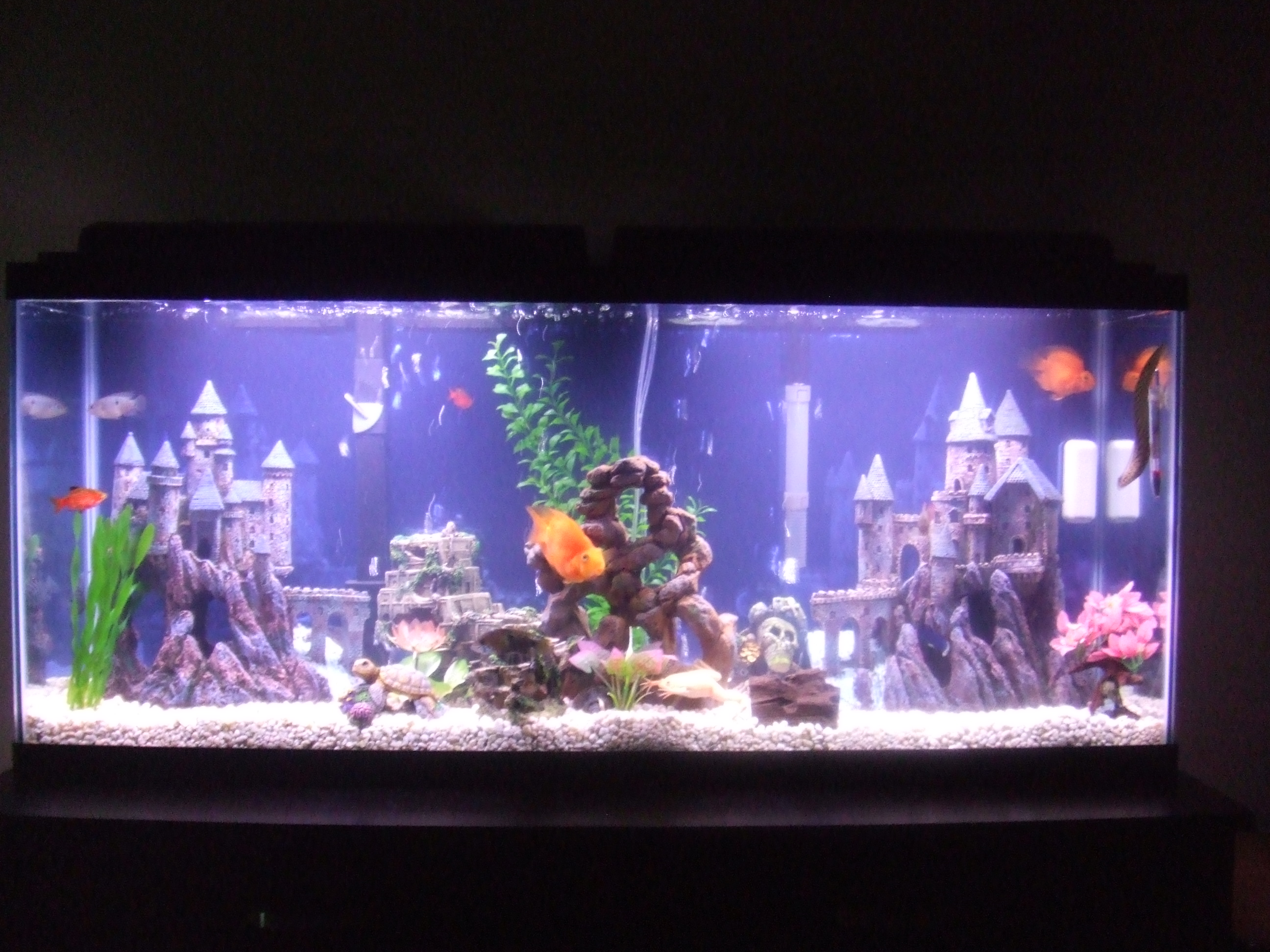 Tank examples mixed community for Aquarium stone decoration