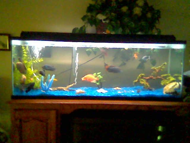 Tank examples 60 gallon for 90 gallon fish tank dimensions