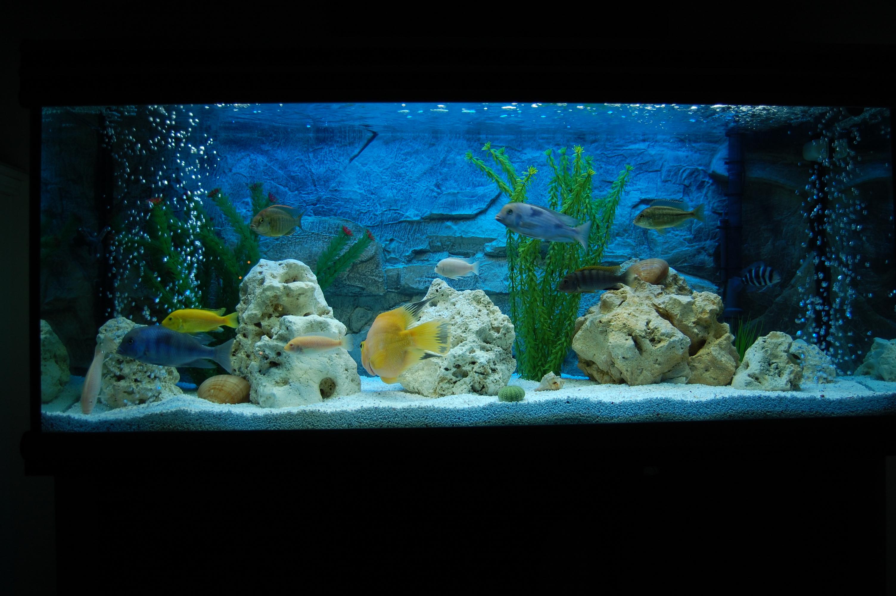 Pictures Of Oscar Fish Tank Setup Kidskunst Info