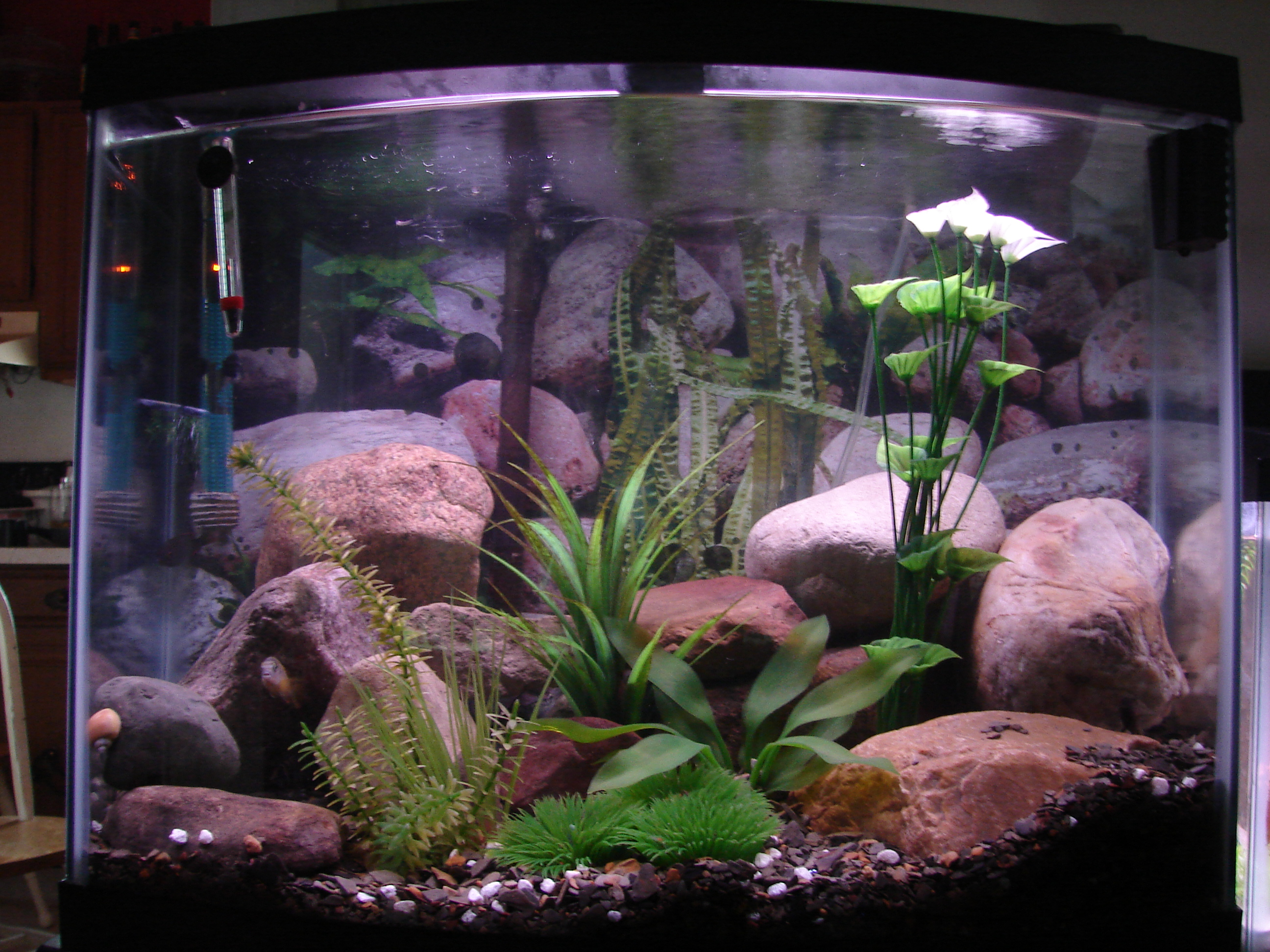30 gallon african cichlid tank Thirty gallon fish tank