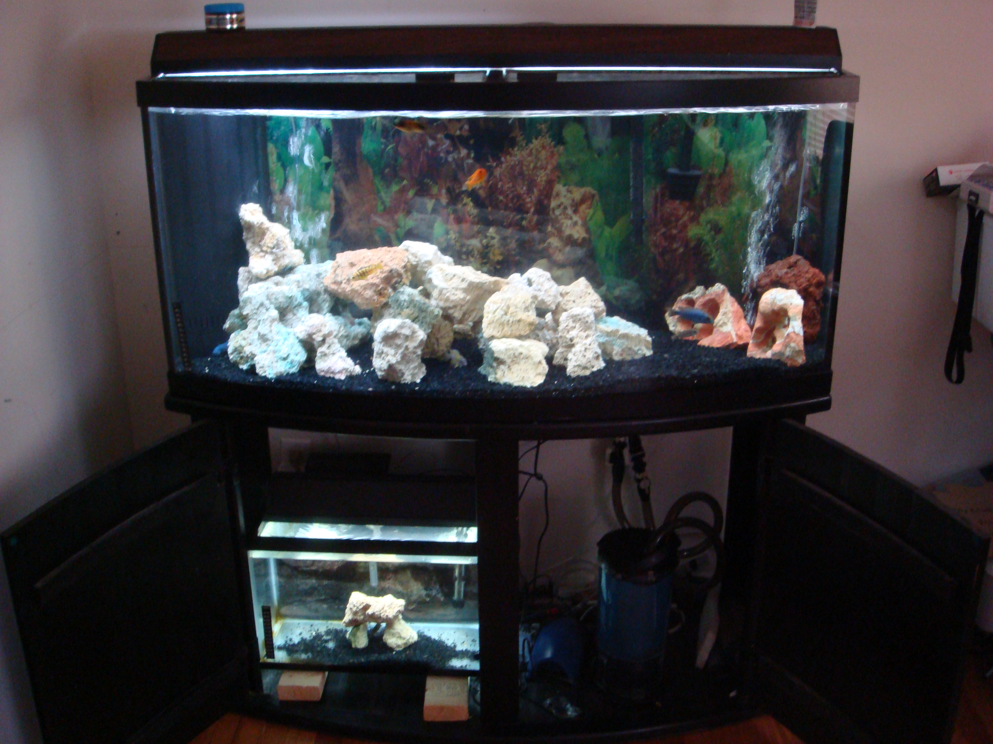 My 72 gallon bow front african cichild set up for Bow front fish tank