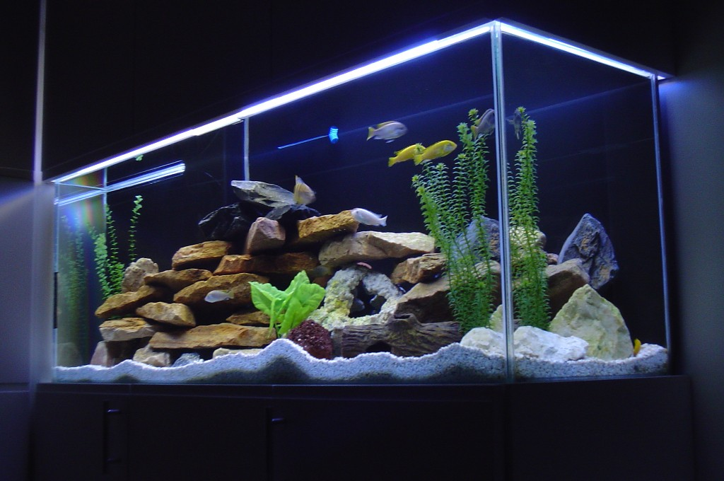 Tank examples for African cichlid tank decoration