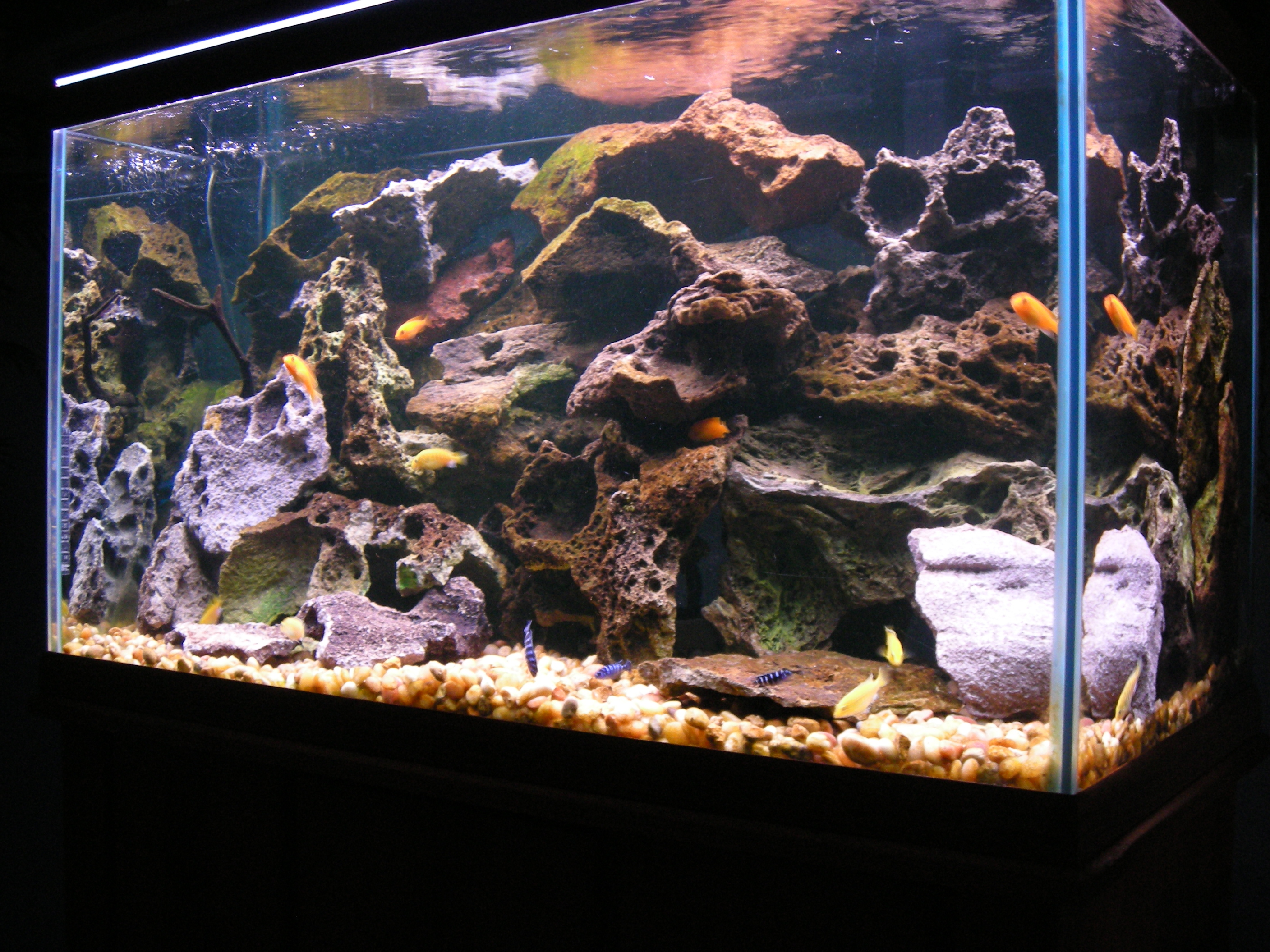 Tank examples 58 gallon lake malawi tank for African cichlid rock decoration