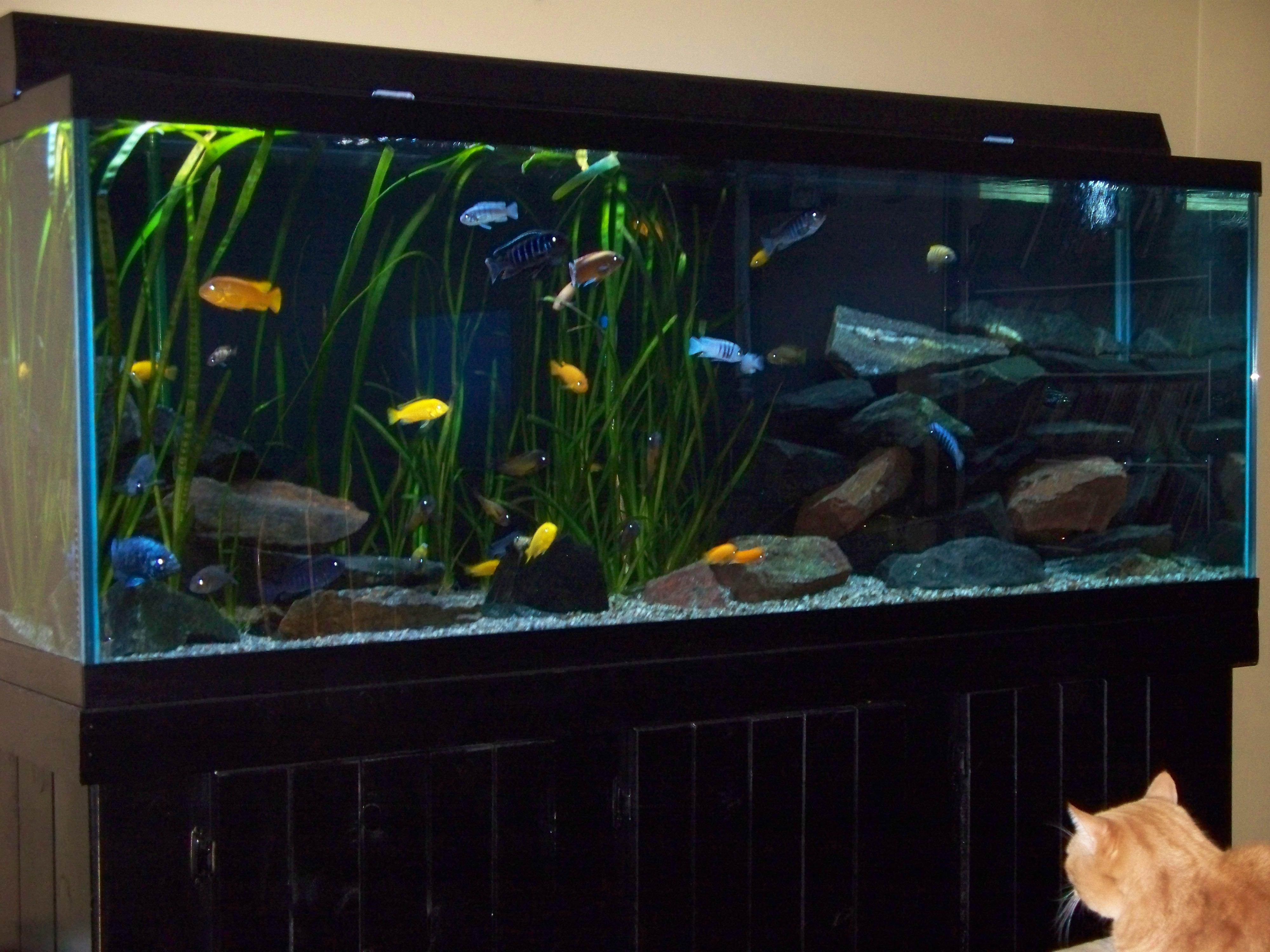 150 gallon display tank for 37 gallon fish tank