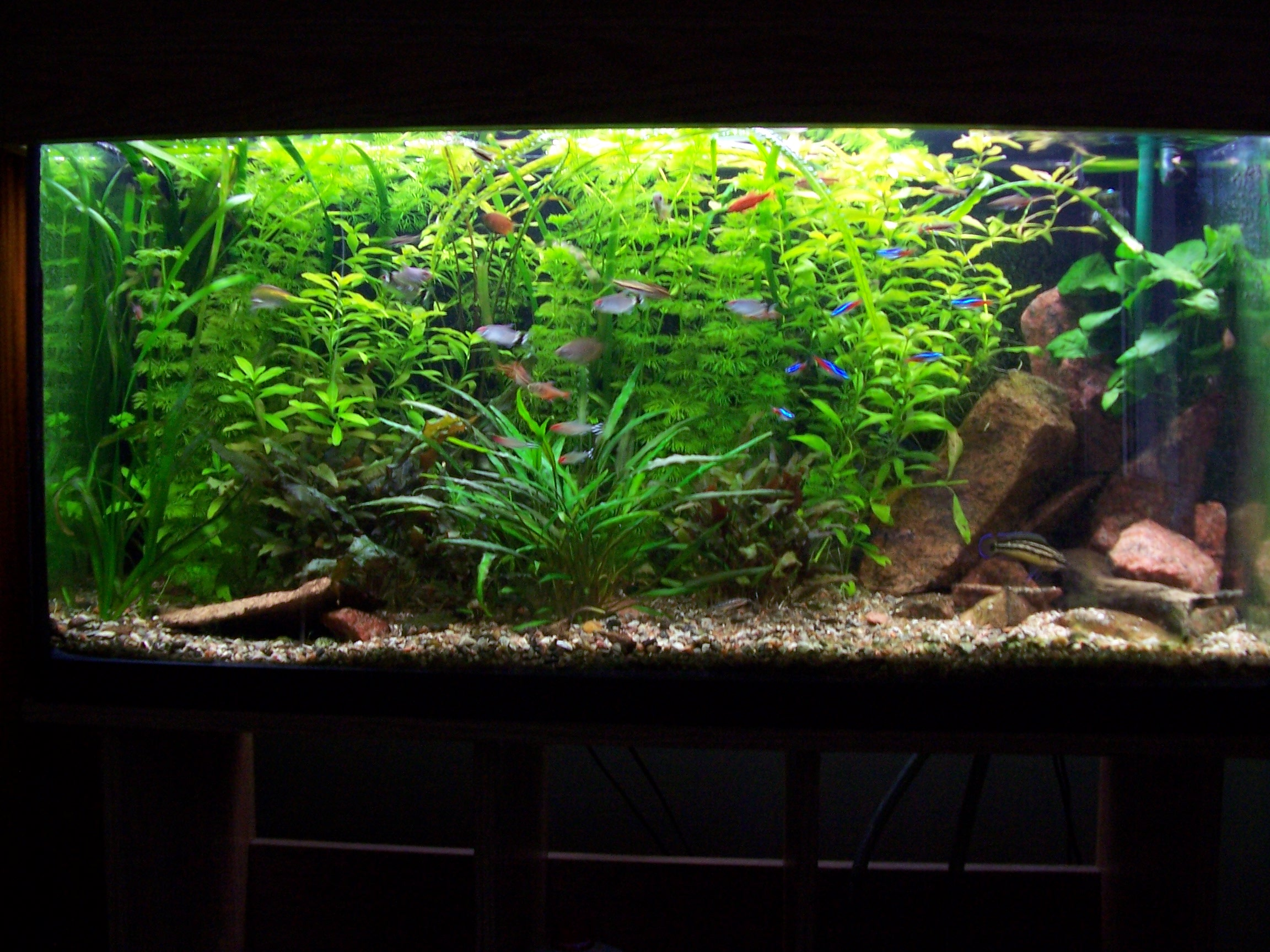 20 gallon fish tank ideas pictures to pin on pinterest for 10 gallon fish tank stocking ideas