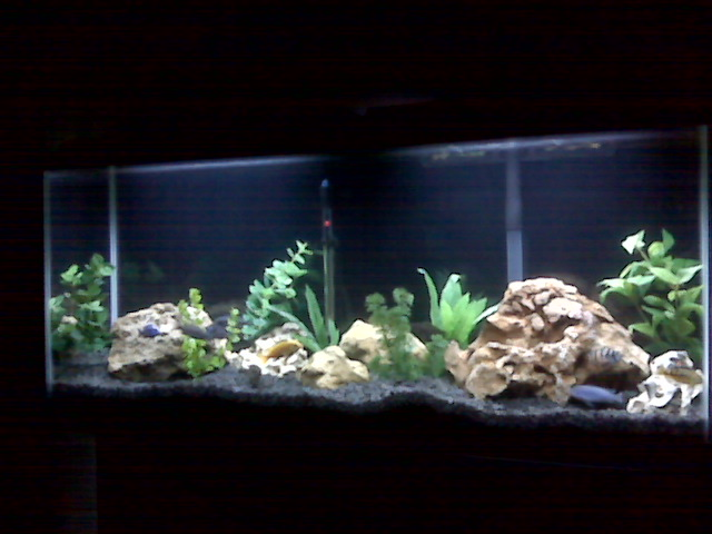 Tank examples for Black sand fish tank
