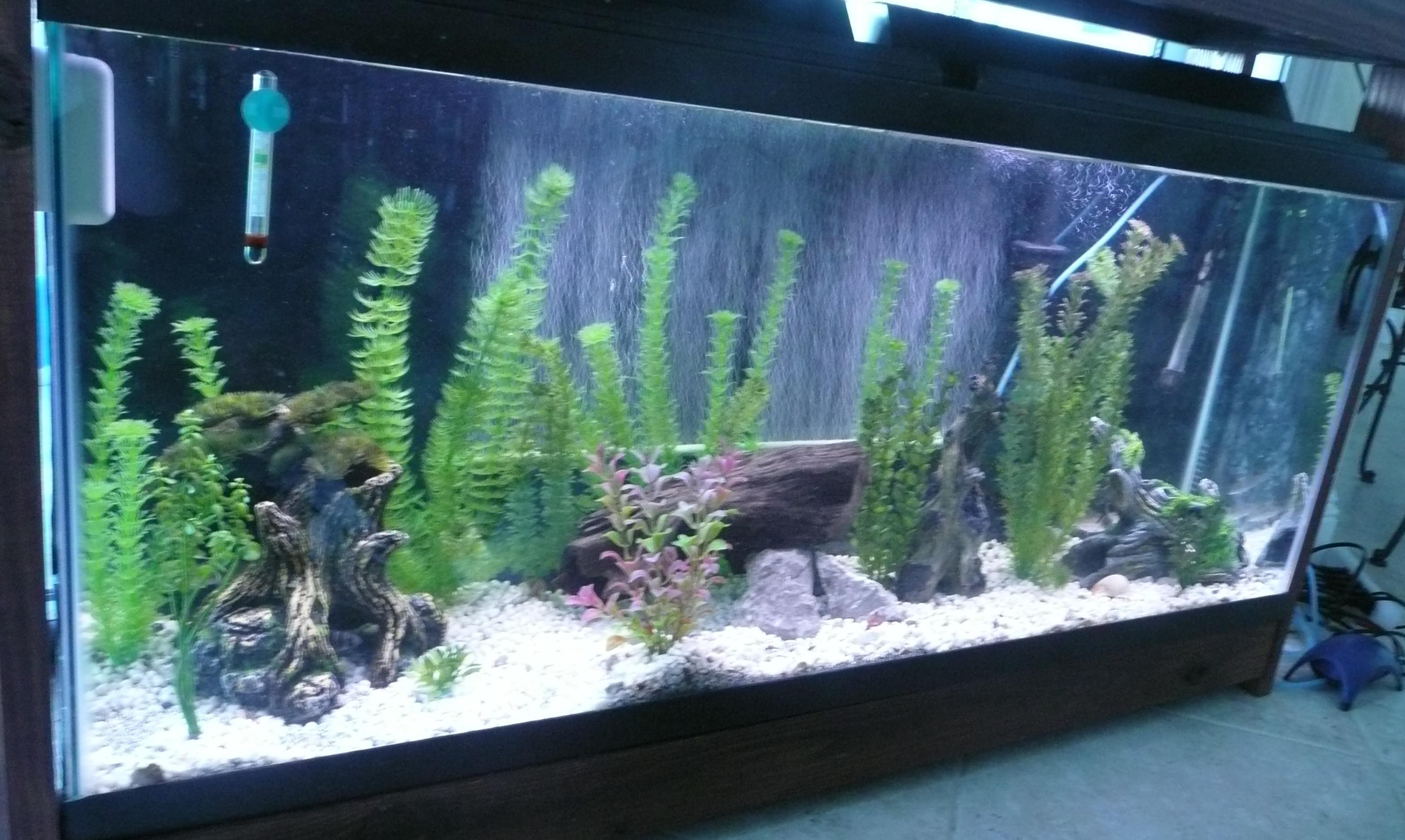 Tank examples 55 gallon mixed aquarium for 55 gallon fish tank size